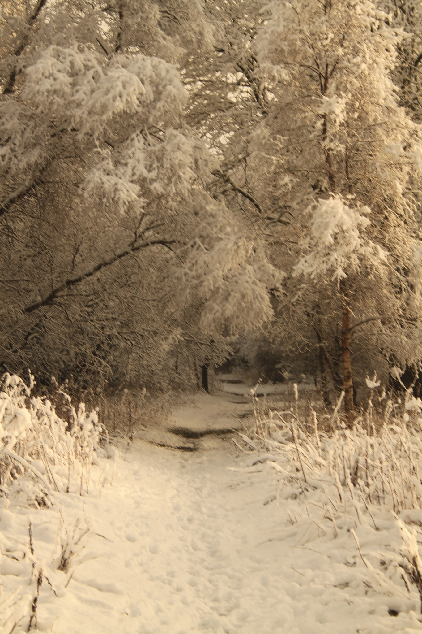 winter walk by Alisters Photos
