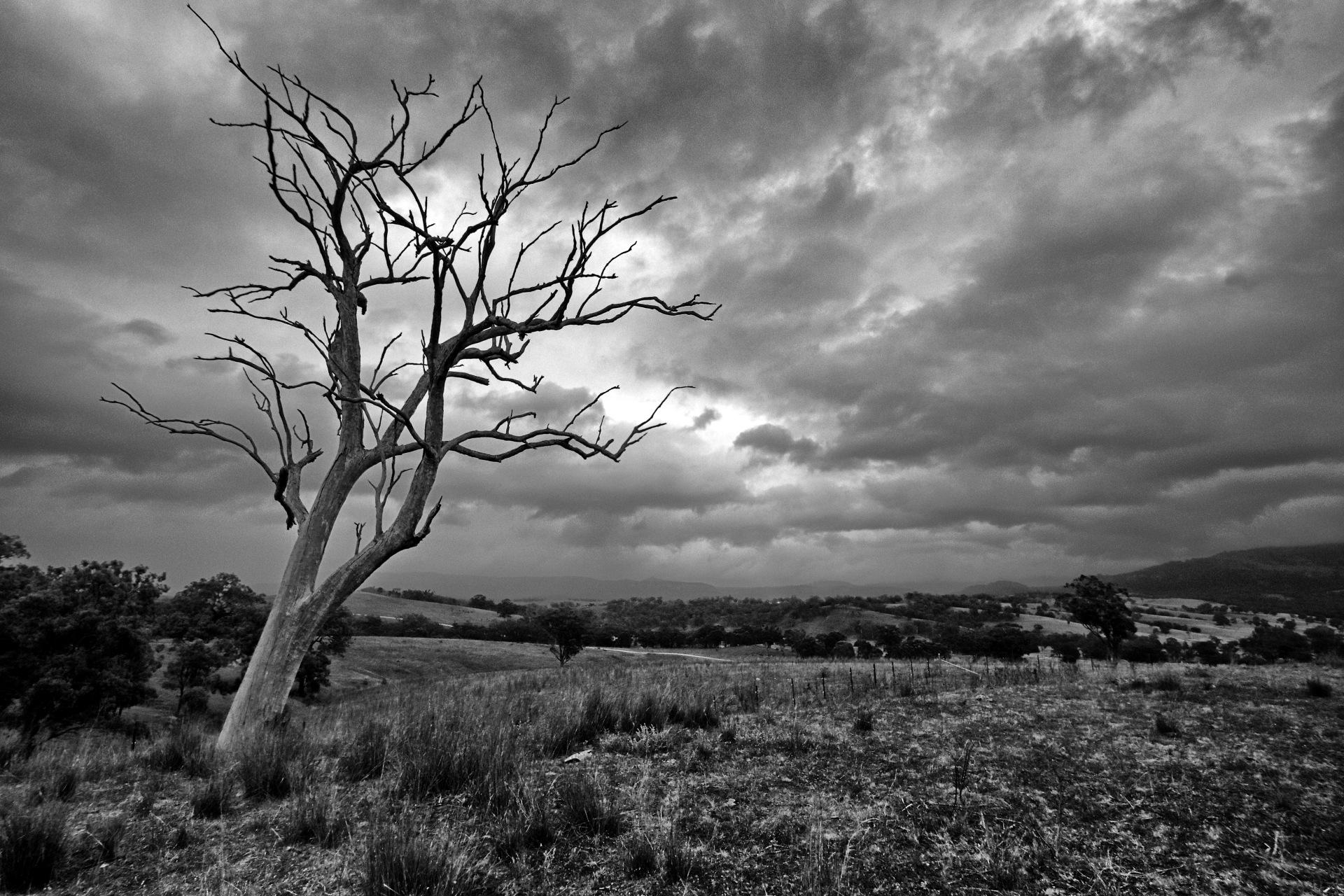 Defiance. by Ian Ramsay