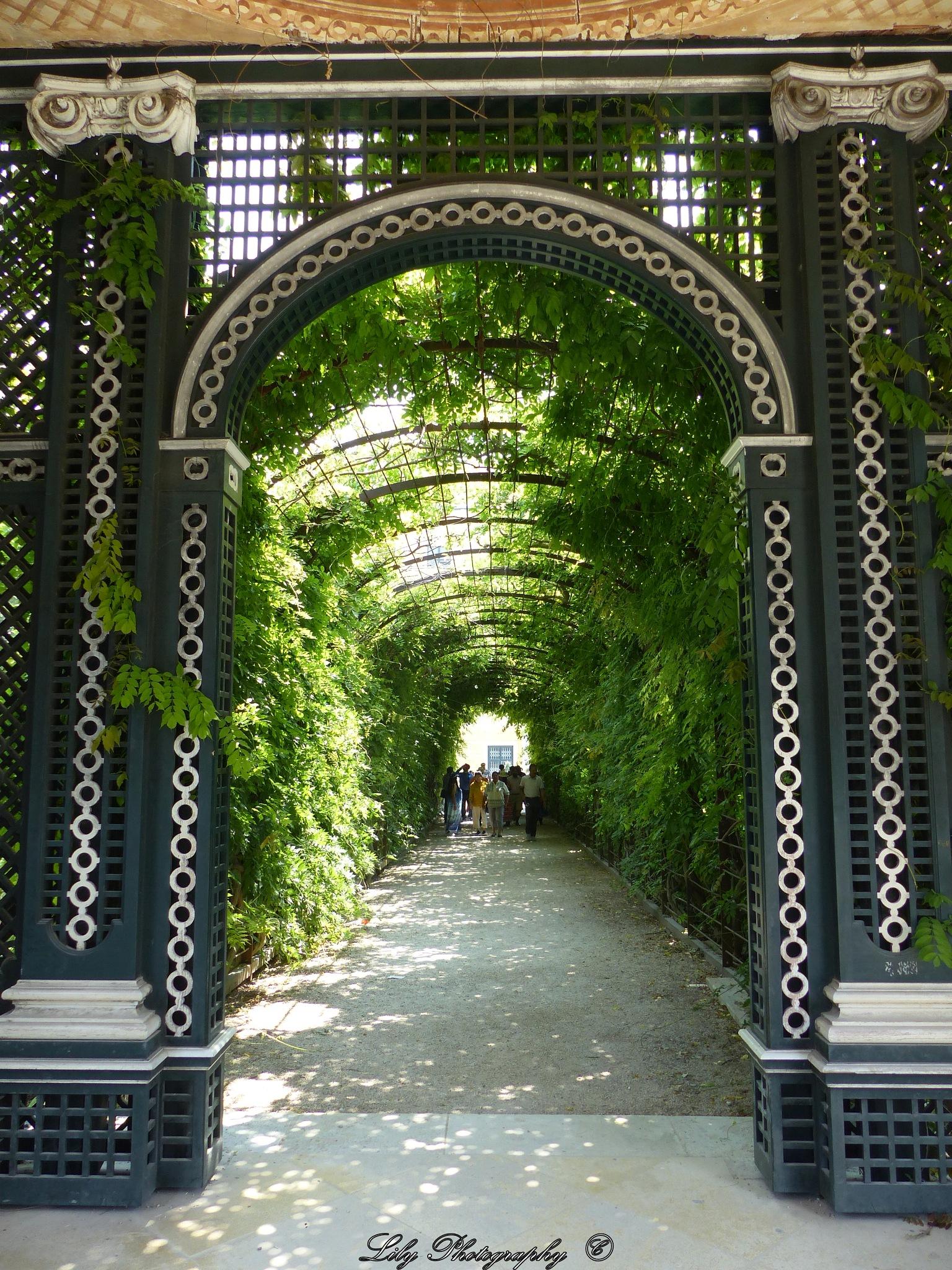 Gate of green by Lilla Ondok