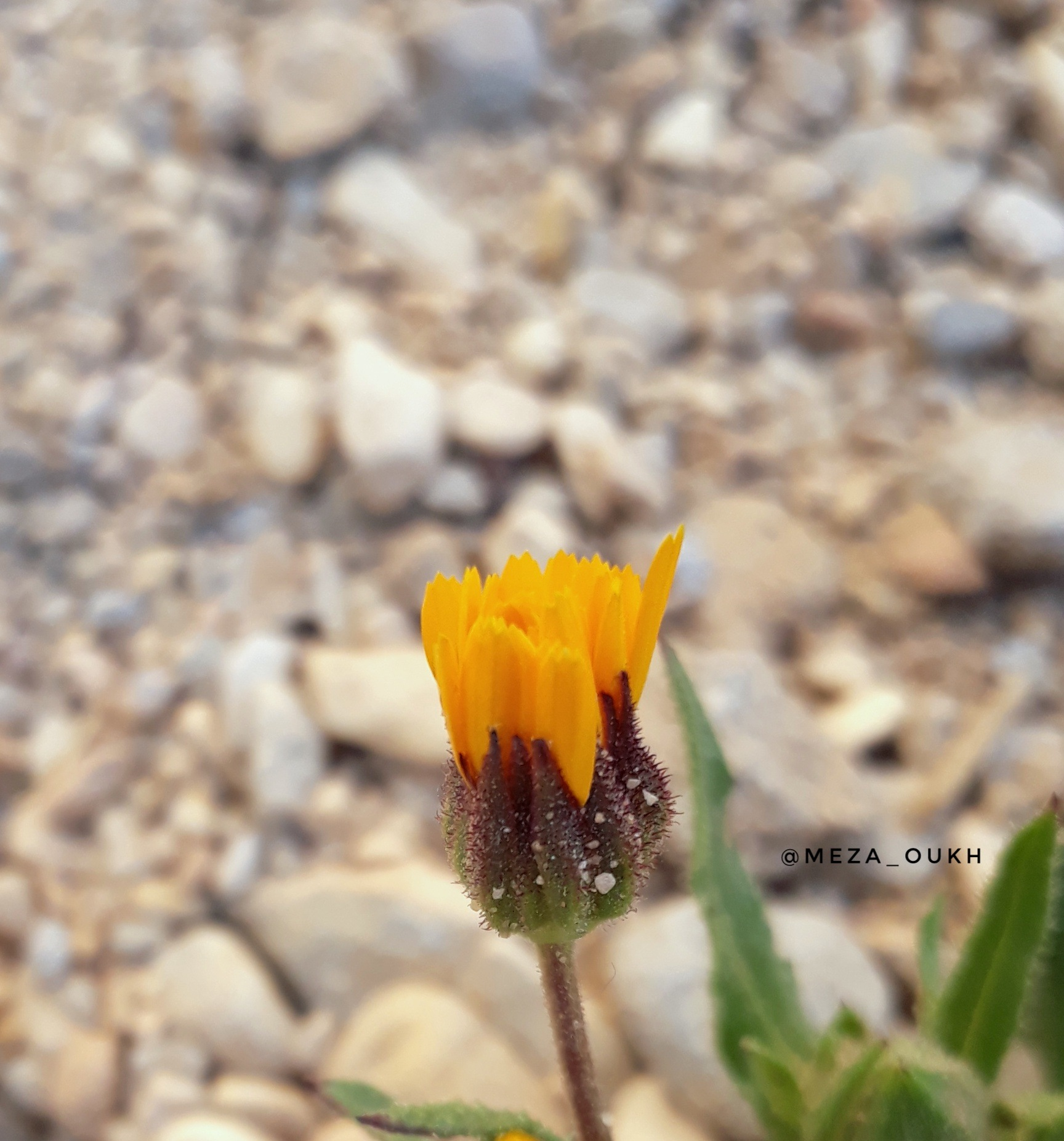 a flower by SAAD MEZAOUKH