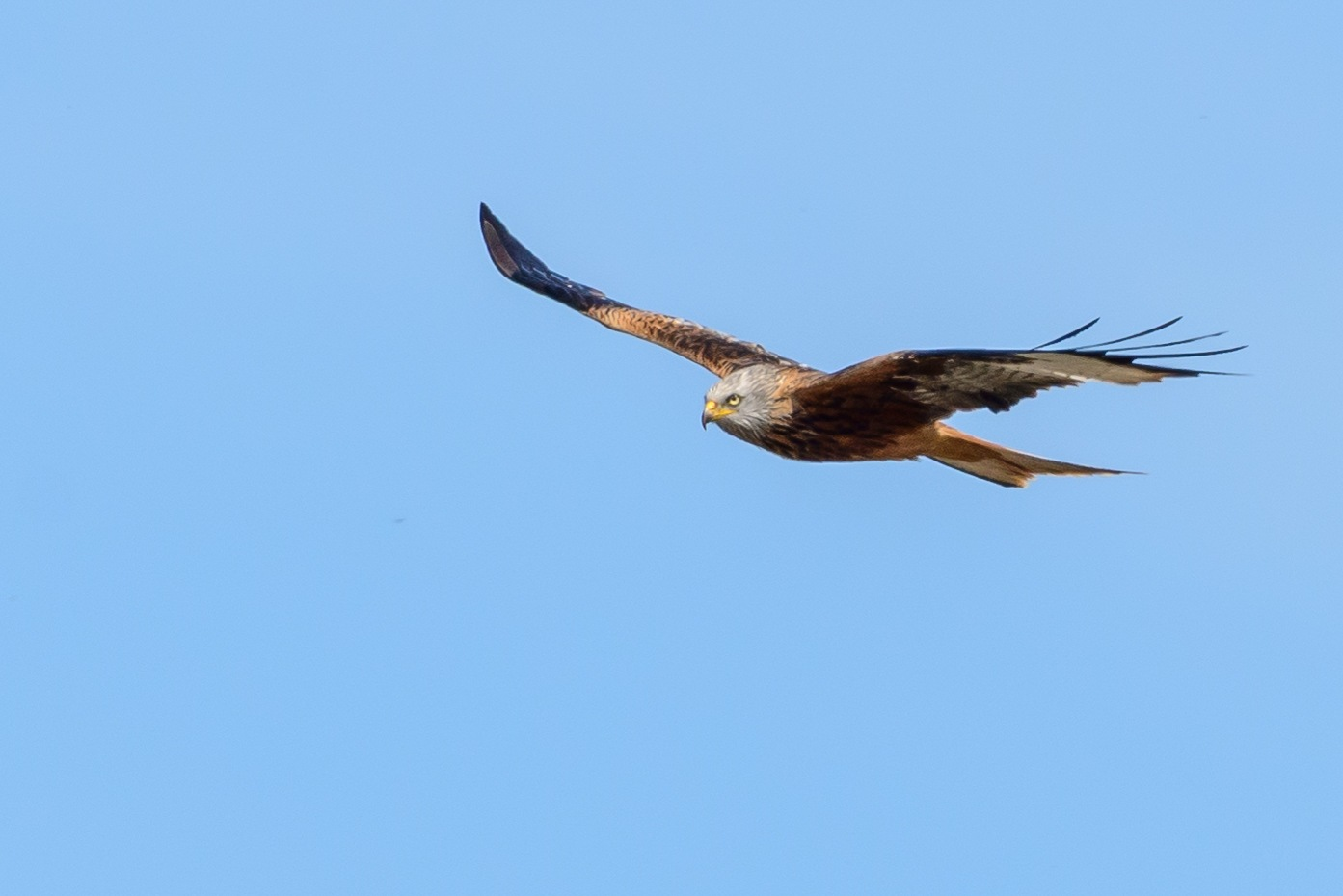 Kite in Flight by Keith Perry