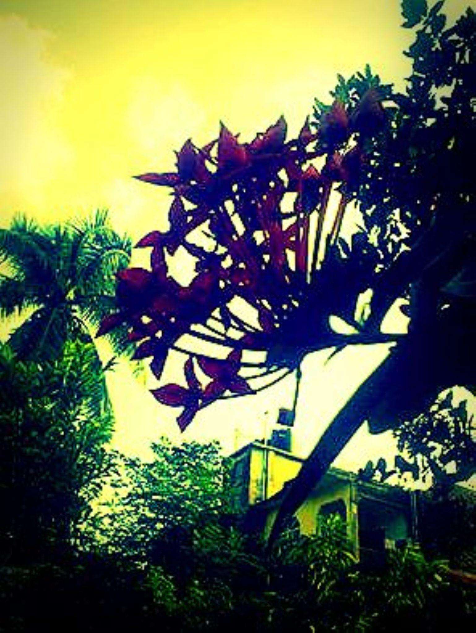 MiD  Day ...!! clk........ by Sudhanshu Shekhar