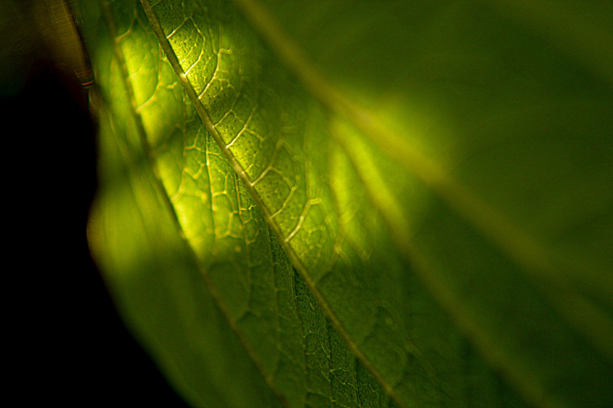 Leaf macro with sunlight by Kayjay18