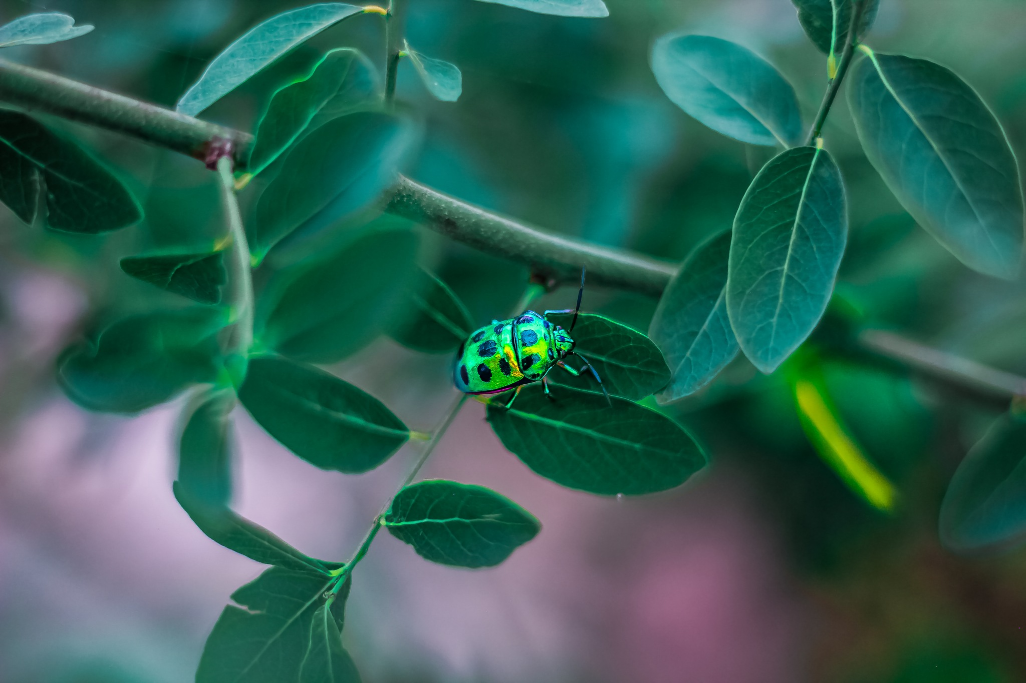 Photo in Nature #bug #nature #green #moody