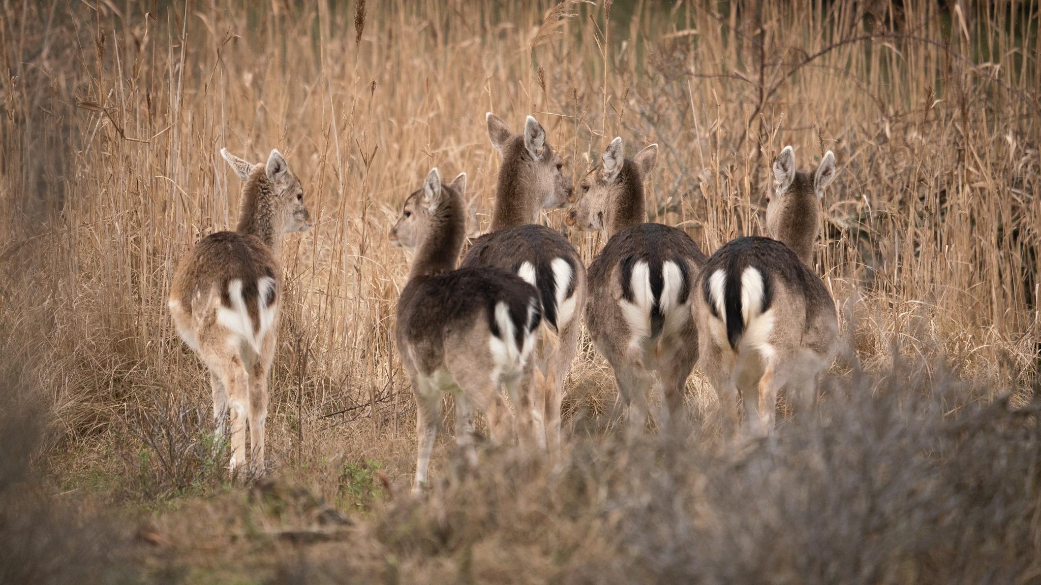 Photo in Nature #deer #nature #wildlife #awd