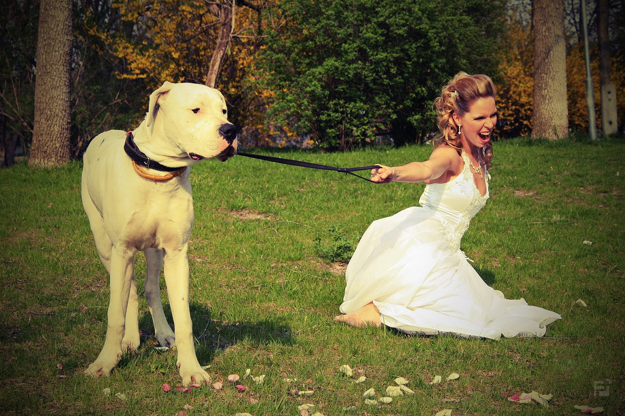 Weddings with Foth Photo/06: The Bride And The Dog by Miklós Fóth