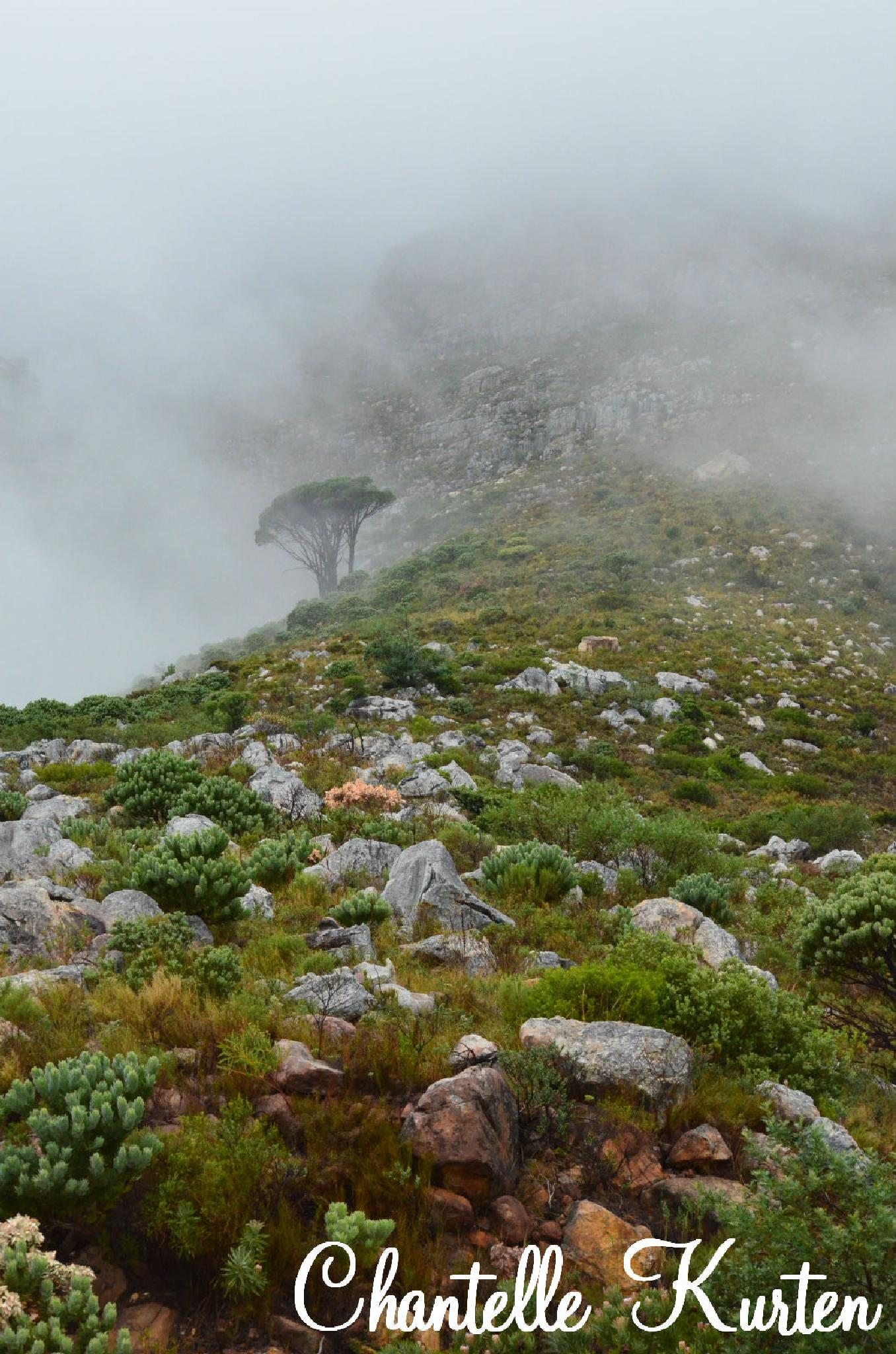 From the bottom of Table Mountain. by Chantelle Maritz