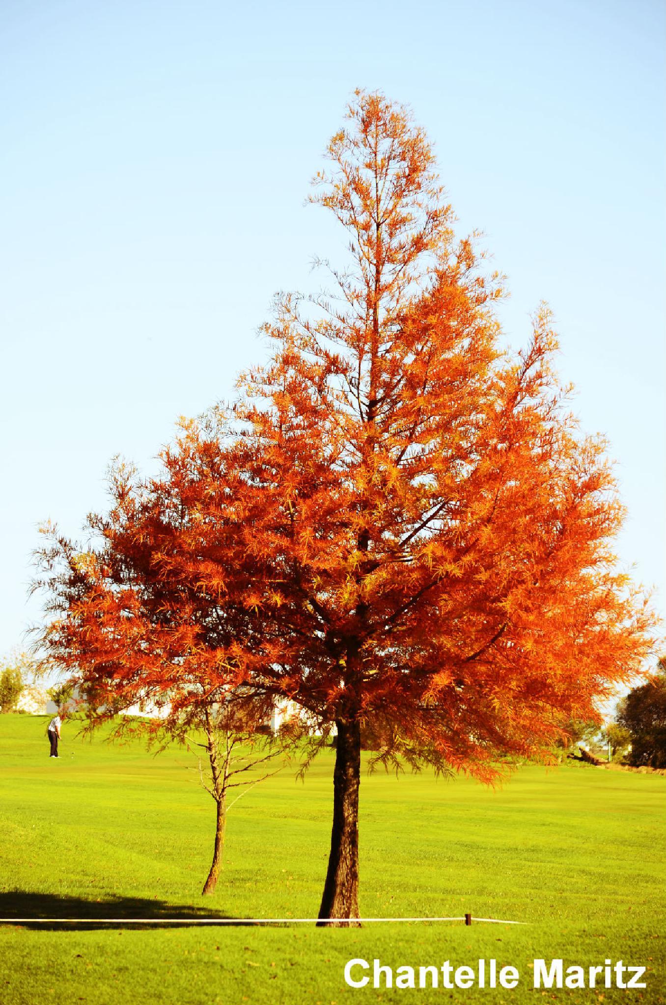 Love those orange trees! by Chantelle Maritz