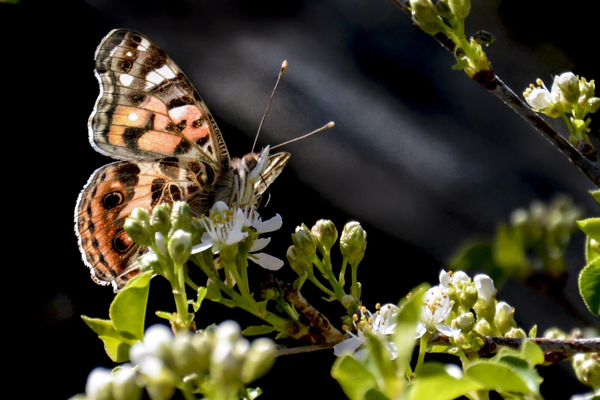 Photo in Random #garden #butterfly #nature