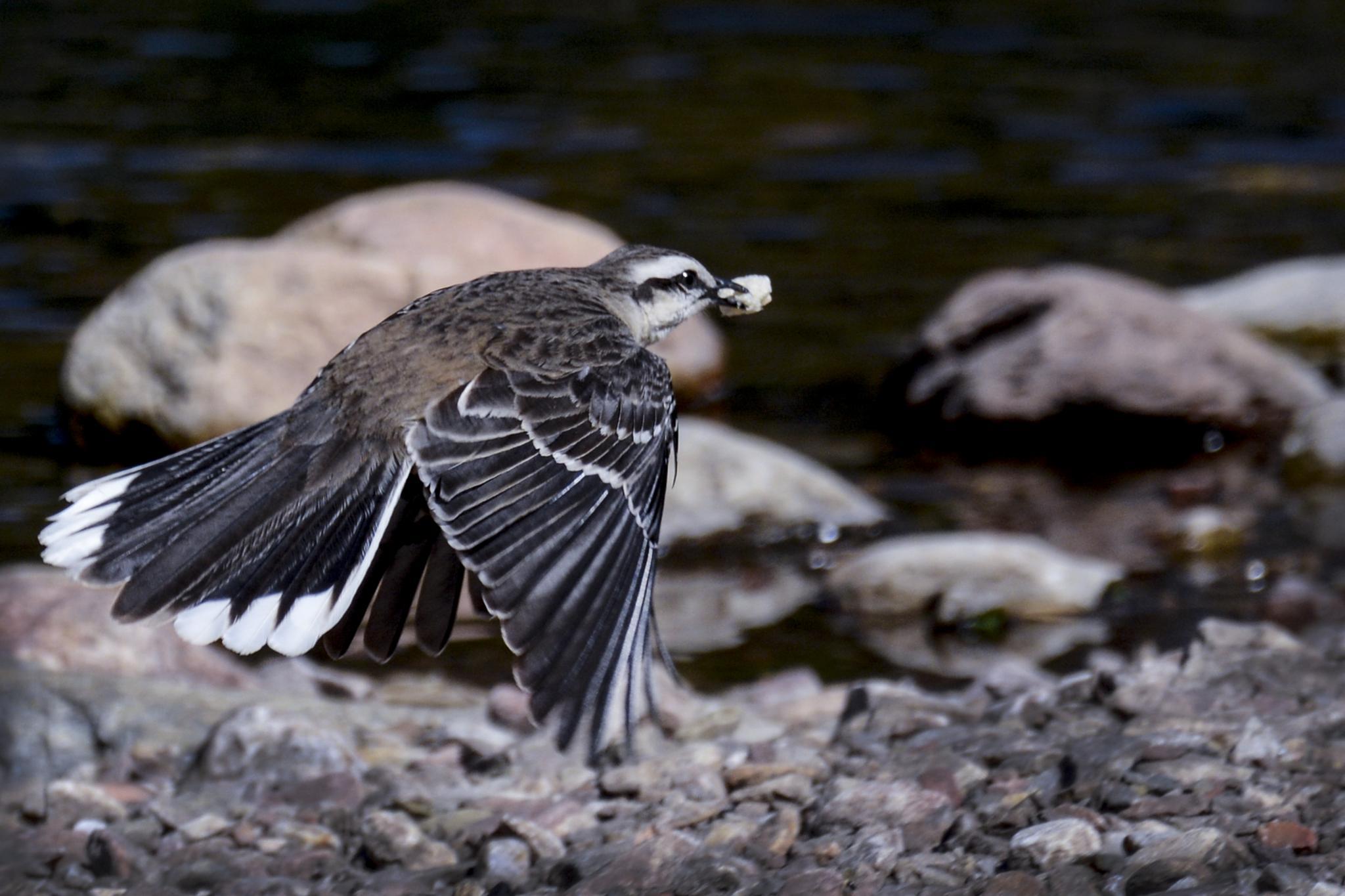 Little Bird by Diana Moreno