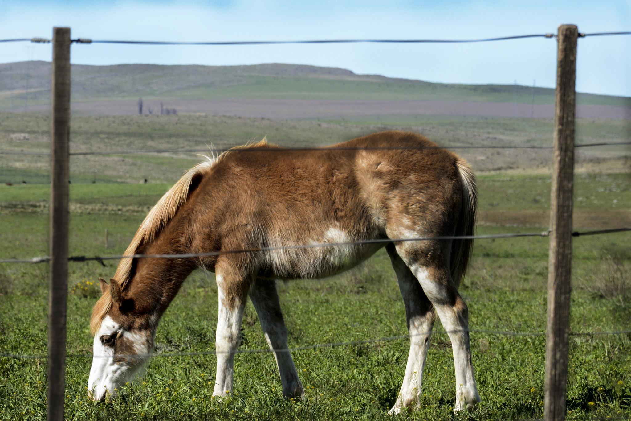 Horse by Diana Moreno
