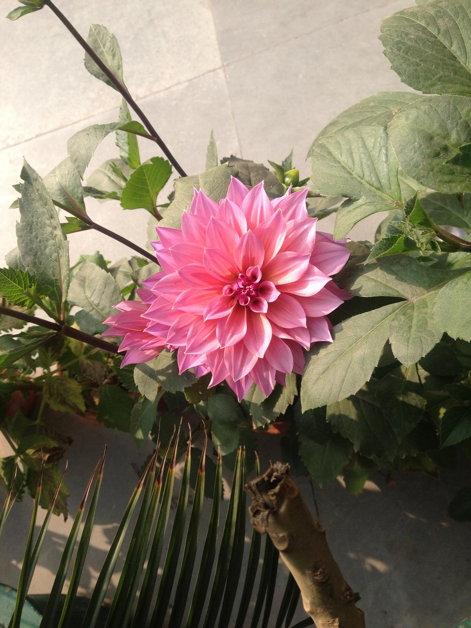 Flower by Shubham Gautam