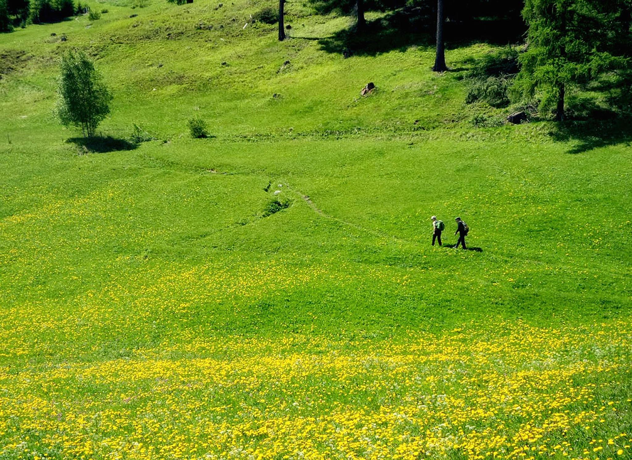Going for a walk, Bürchen, Switzerland by Jason Yoon