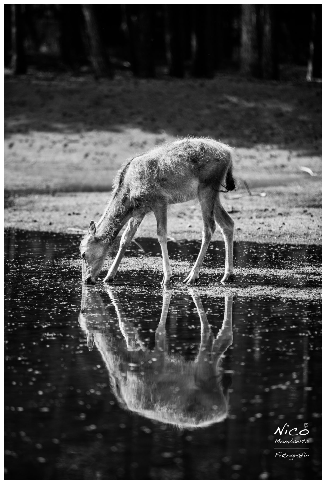 reflections by Nico Mombaerts Fotografie