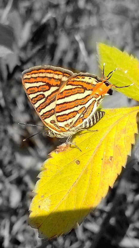 Photo in Macro #macro #nature #colour combination #butterfly