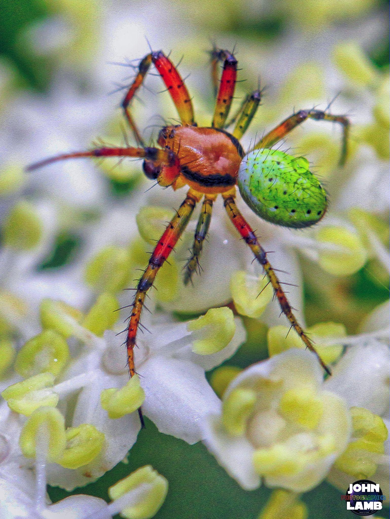 Spider 02 by John Lamb