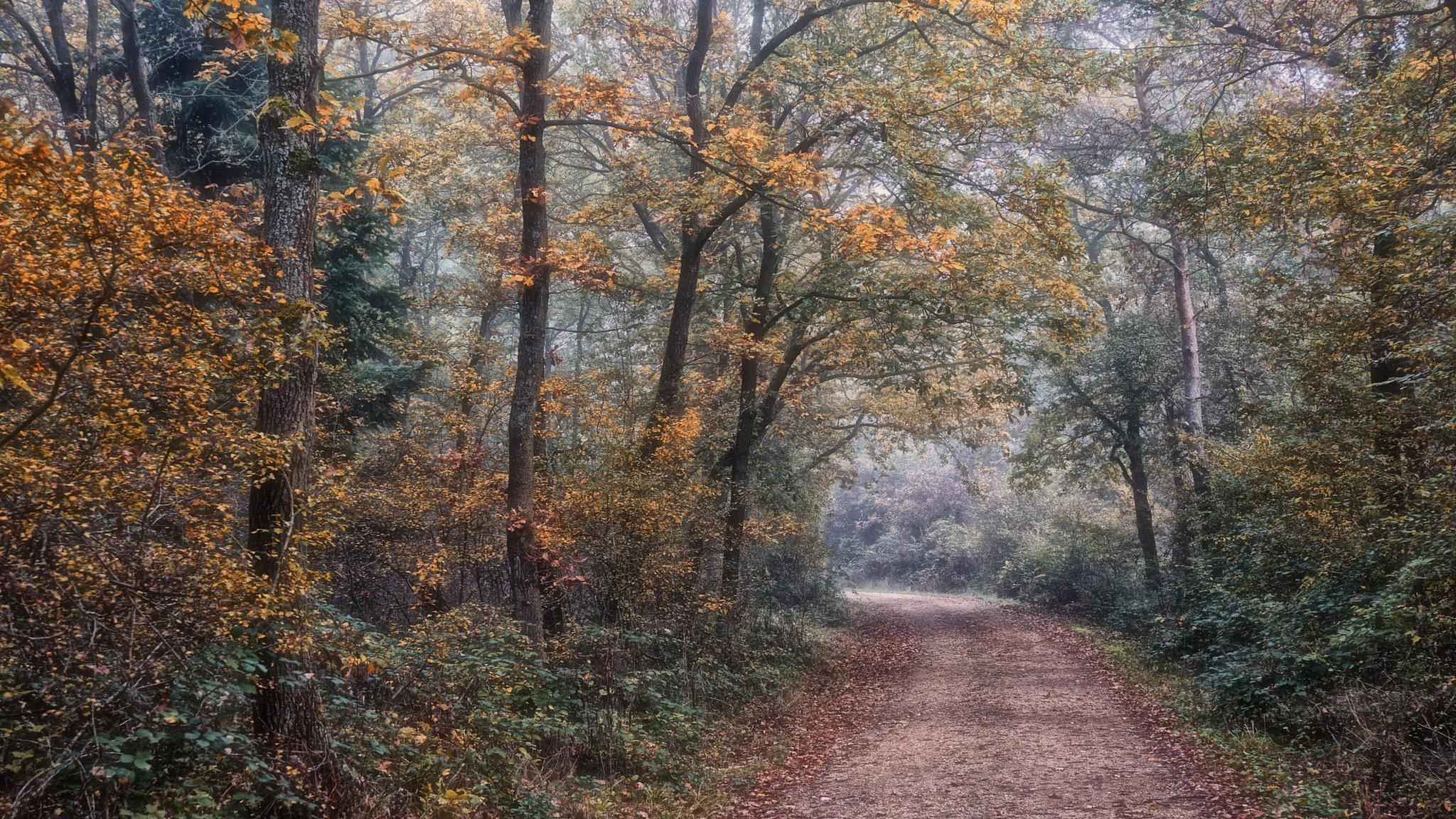 Foggy autumn by Jerryrig