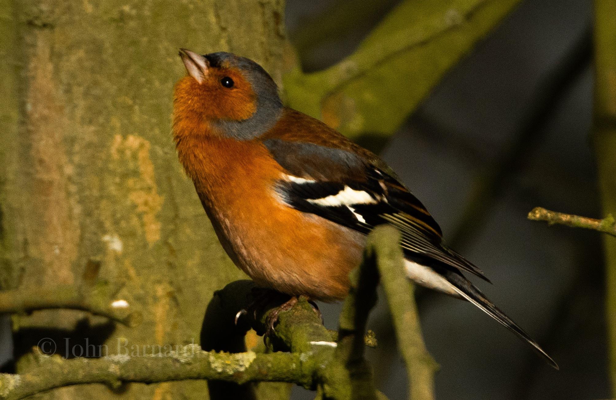 Photo in Nature #wildlife #nature #birds