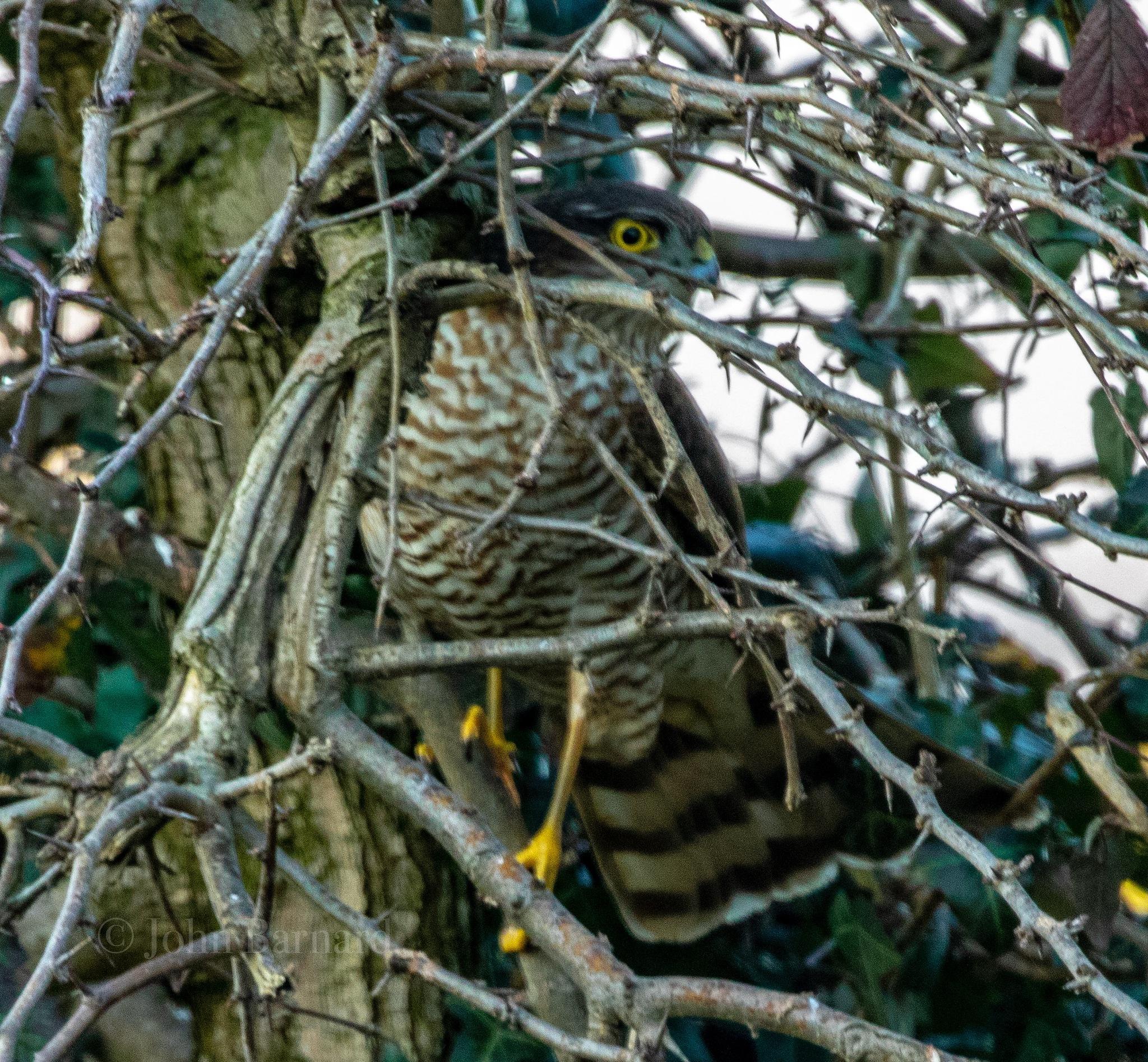 Photo in Nature #wildlifw #nature #ambush