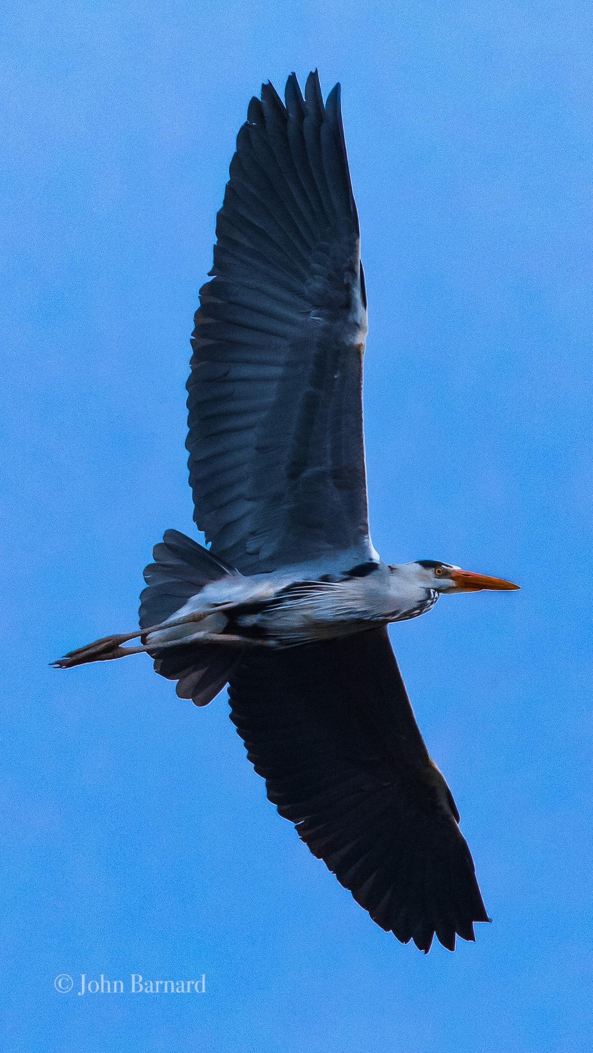 Photo in Nature #nature #wildlife #birdsinflight