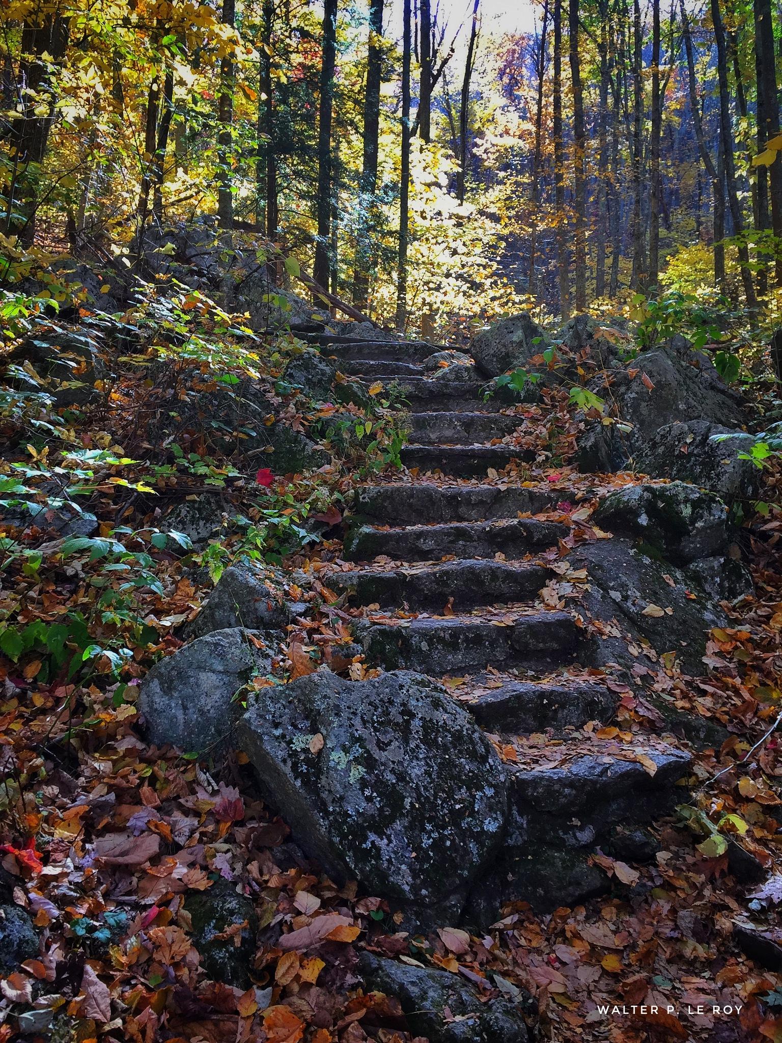 Steps of Shenandoah by Walter Le Roy