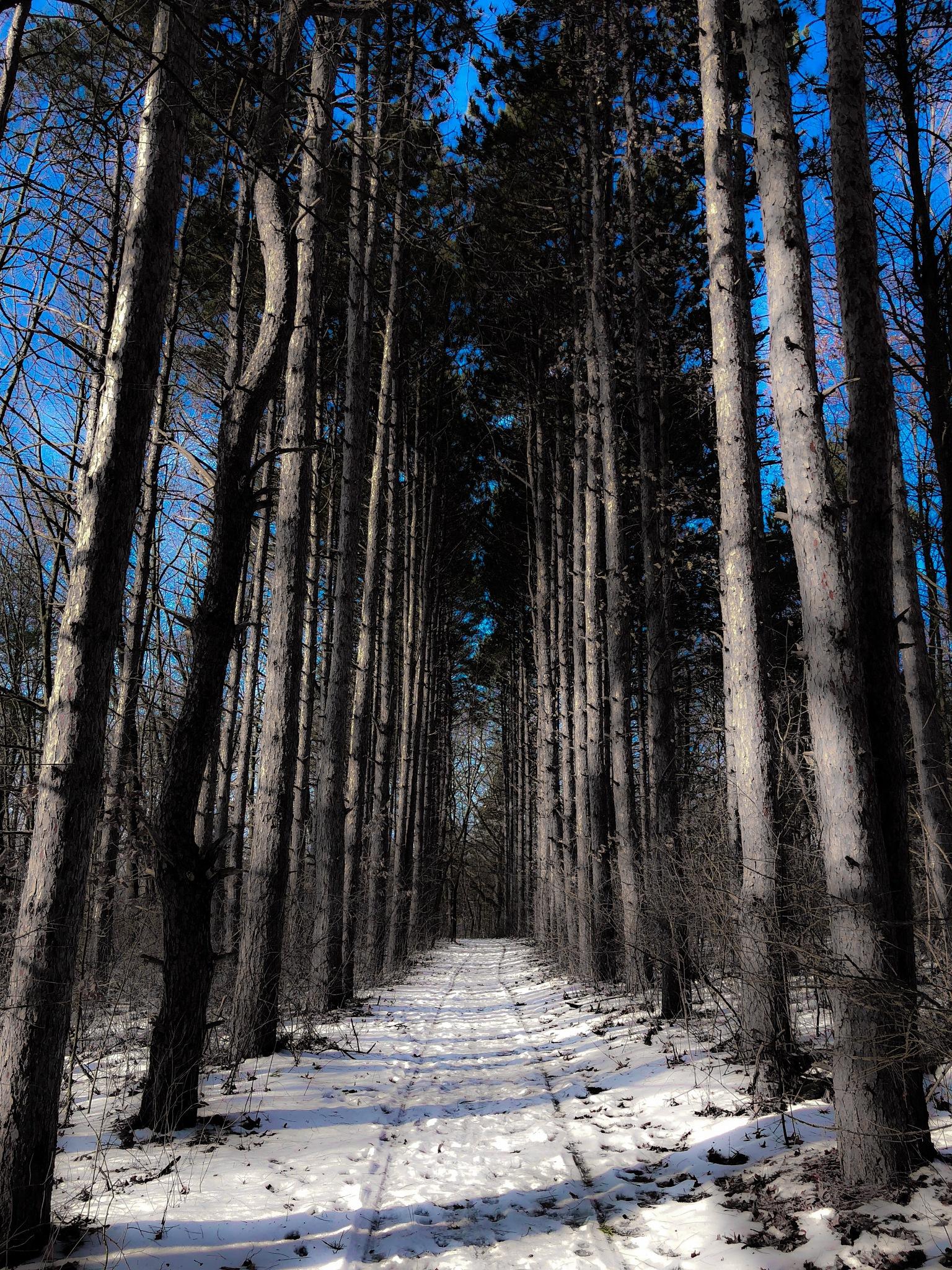 Let's Take a Walk by Sarah Guertin