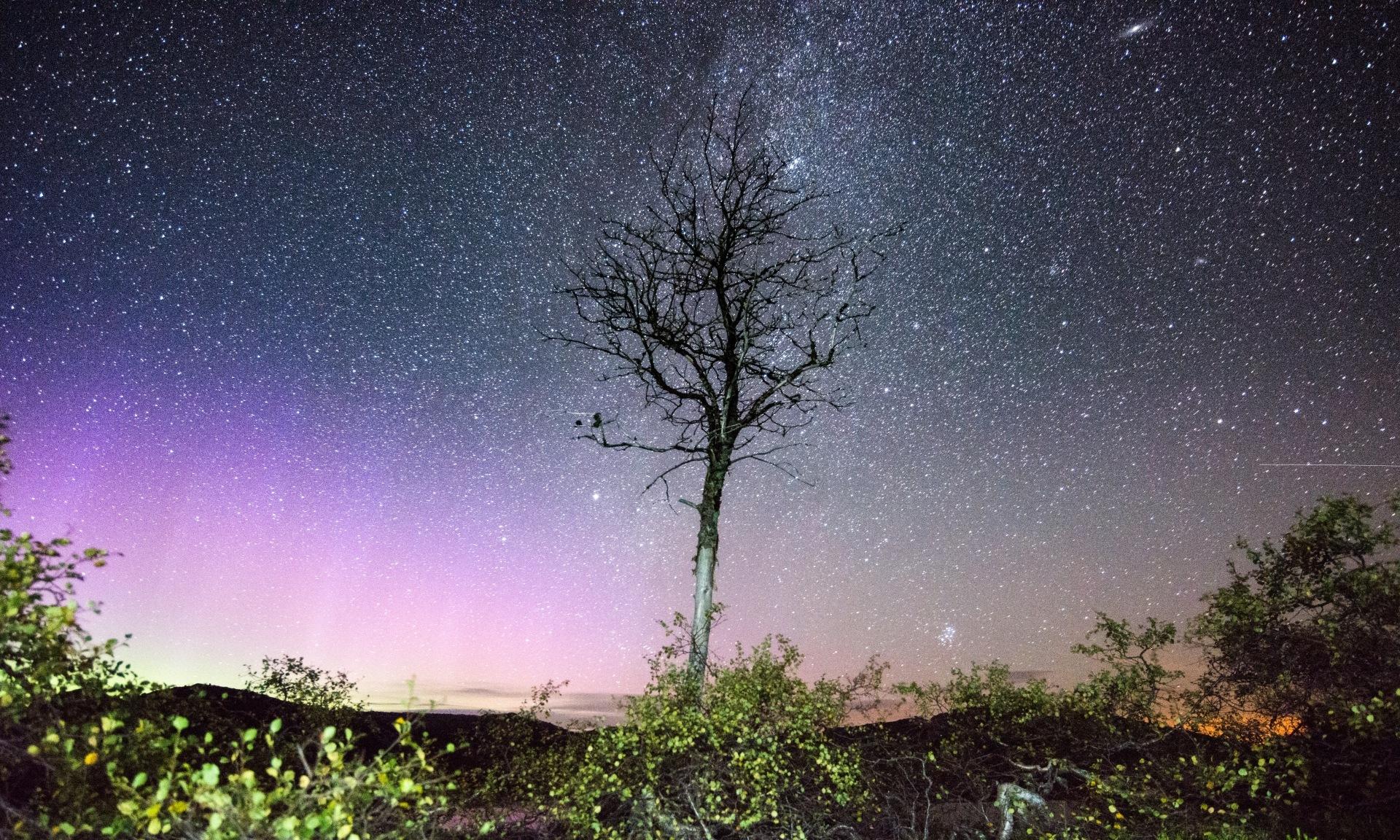 Lonely tree by E Pedersen