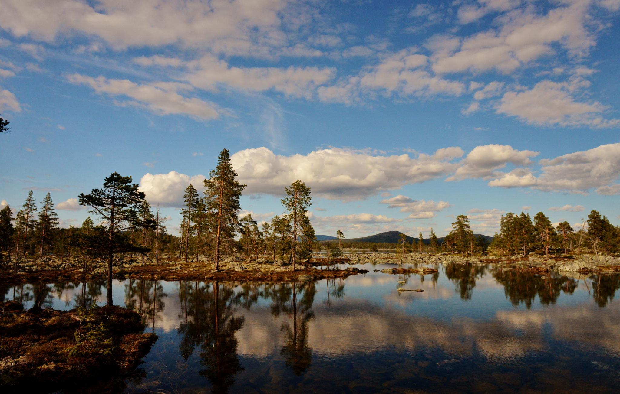 Rocks, trees and water by E Pedersen