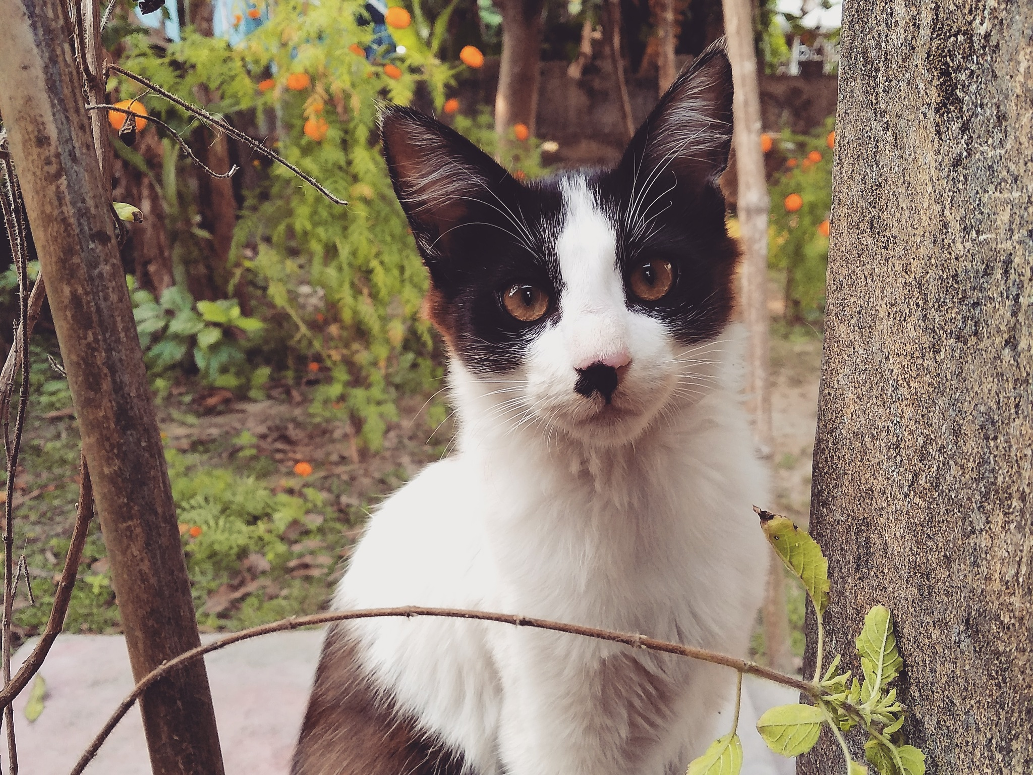 The Cat by Subhrajit Patra