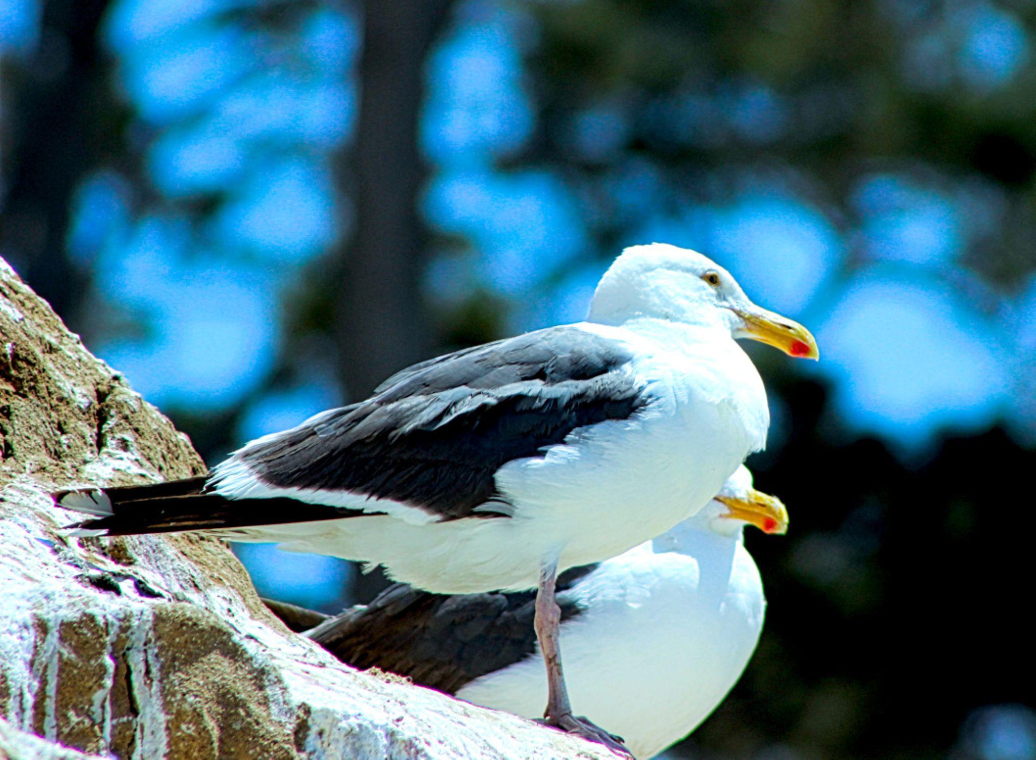 Sea Gulls by Curtis Egan
