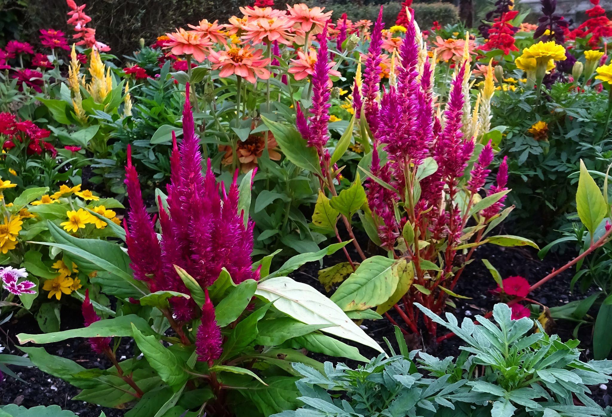 Flower garden by Judy Dean