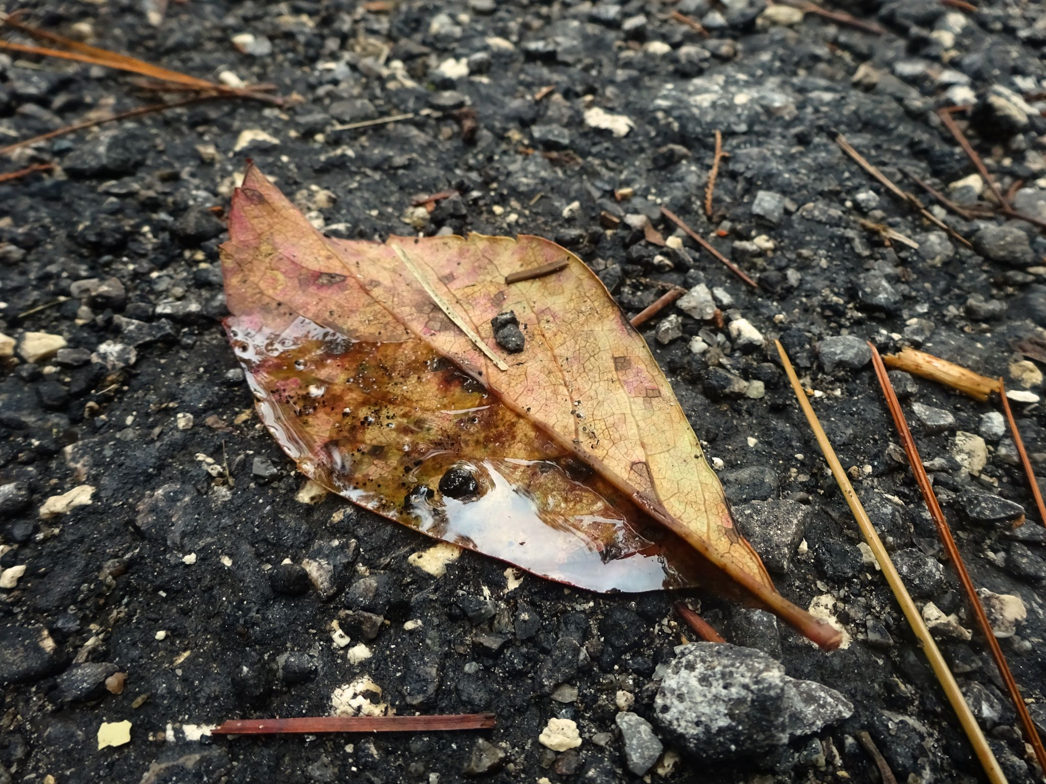 Single leaf by Judy Dean