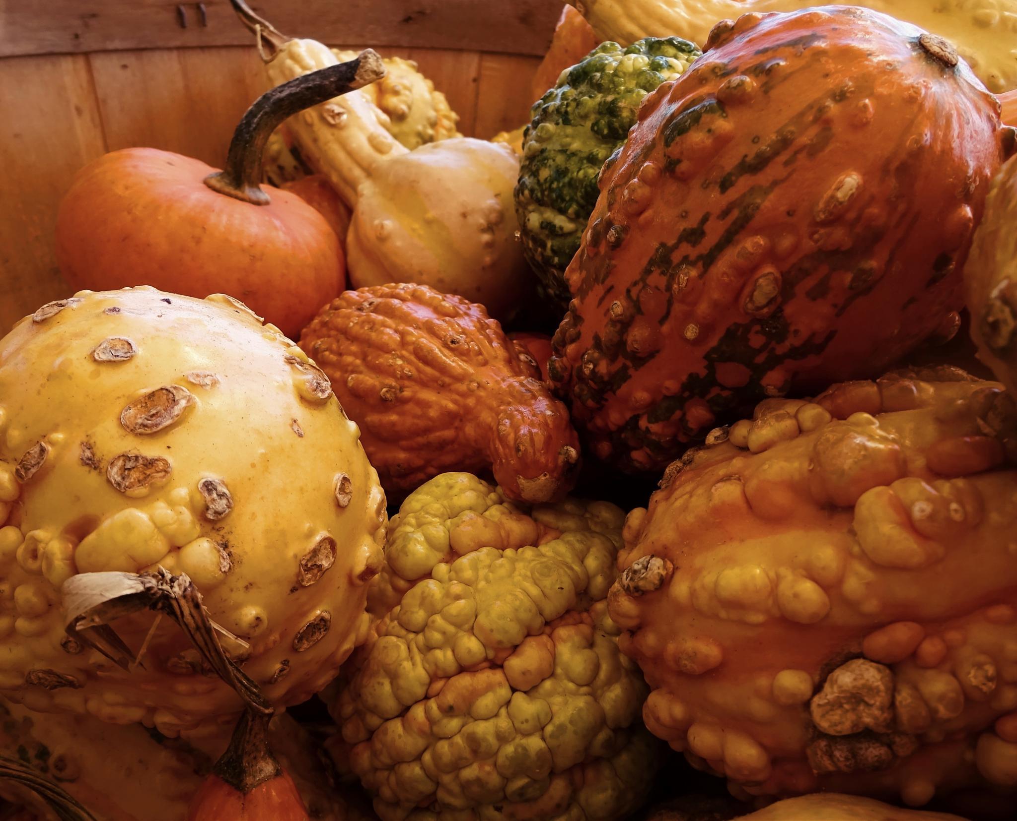 Gourds by Judy Dean
