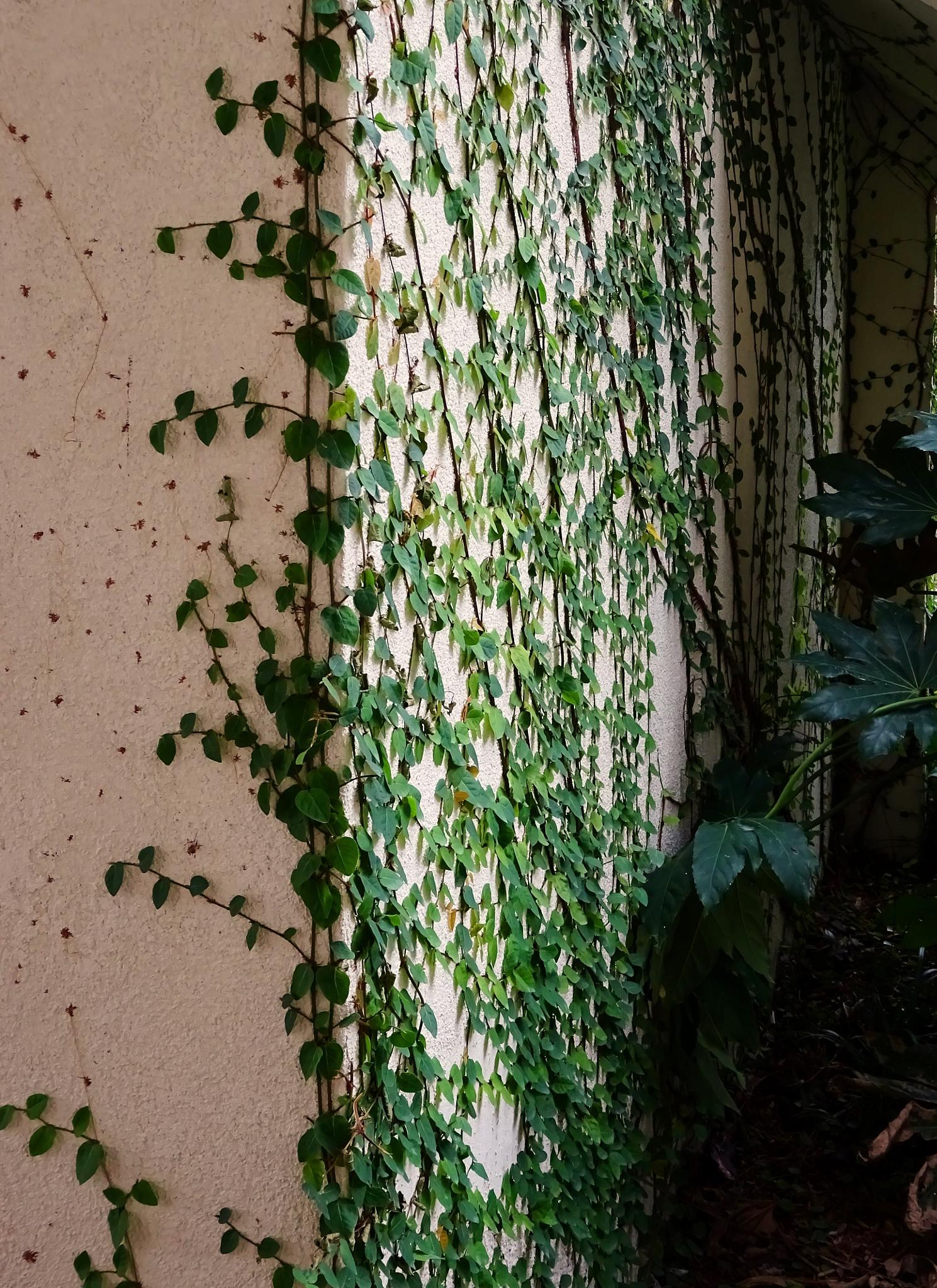 Climbing vine by Judy Dean