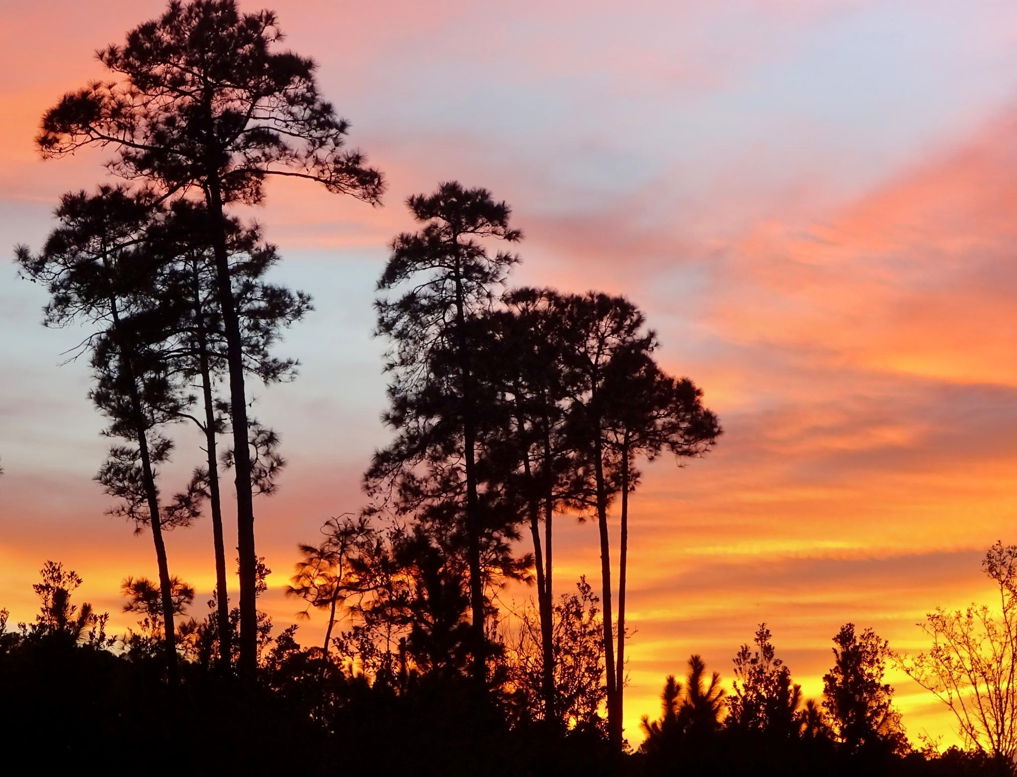 January Sunset by Judy Dean