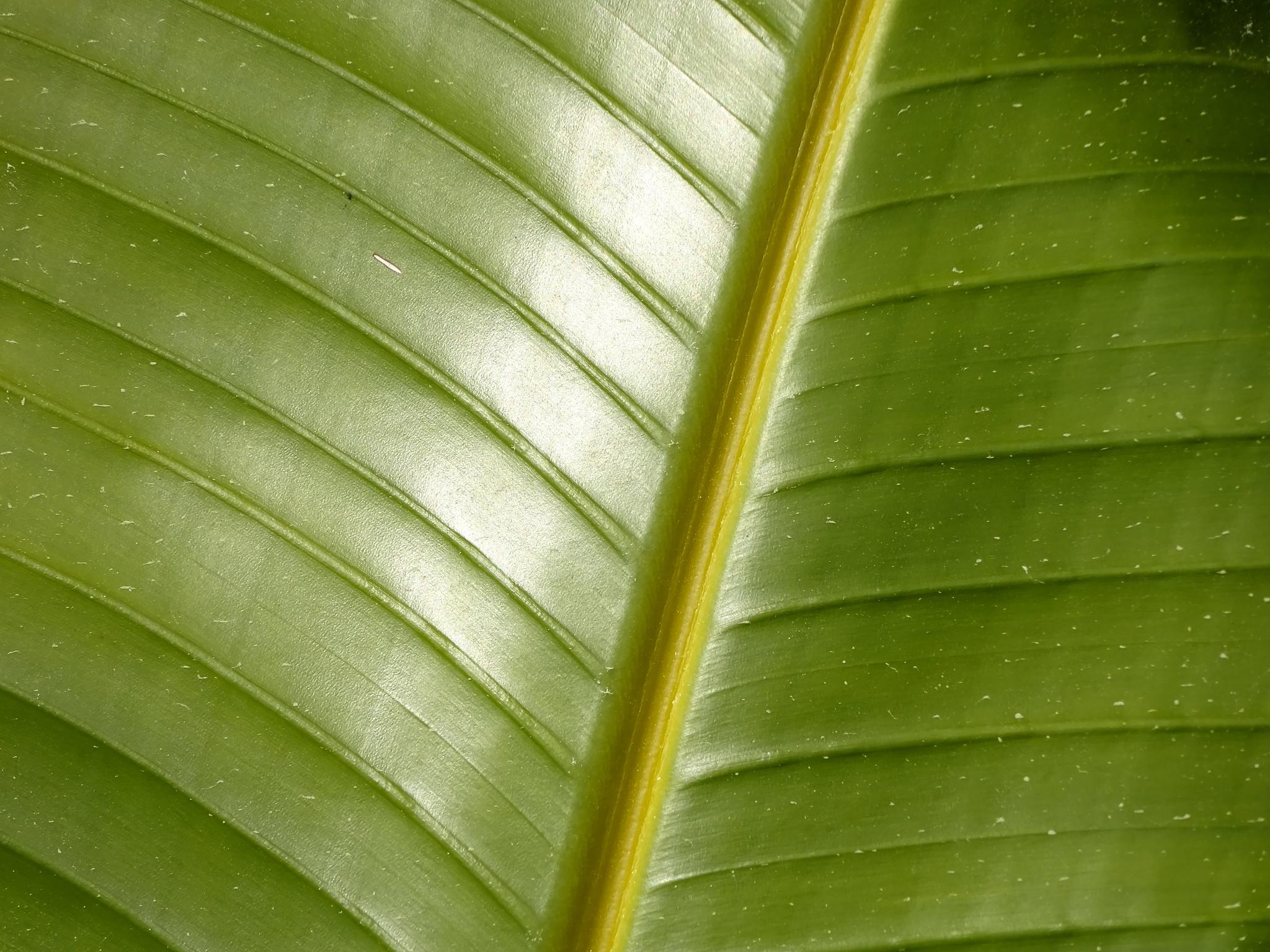 Palm leaf by Judy Dean