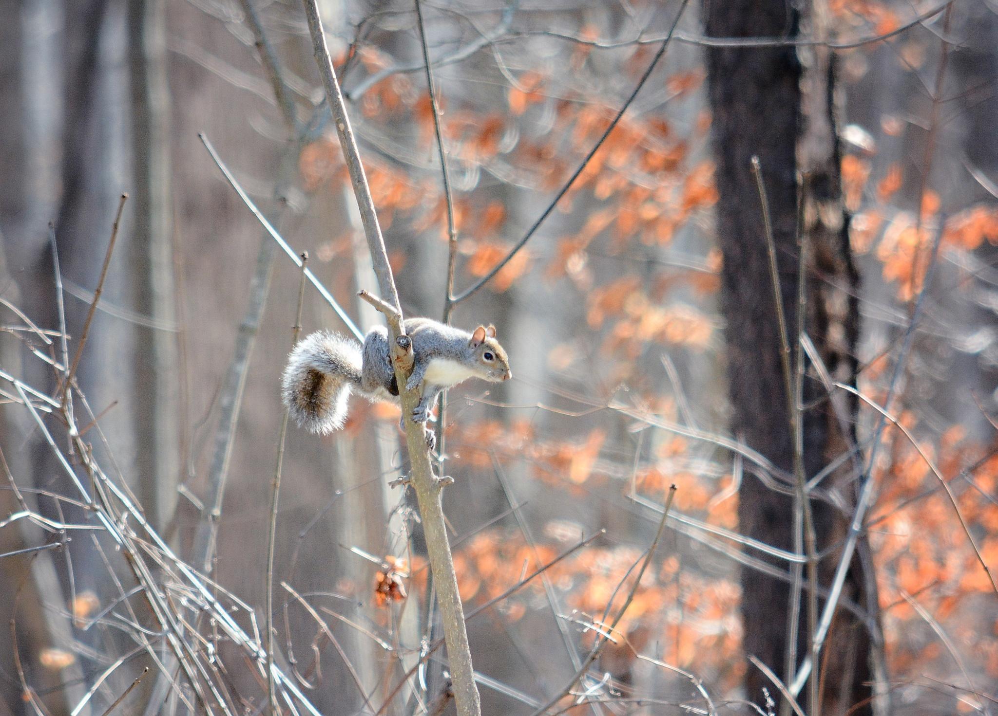 SQUIRREL!!! by Shirley Etheridge Compton