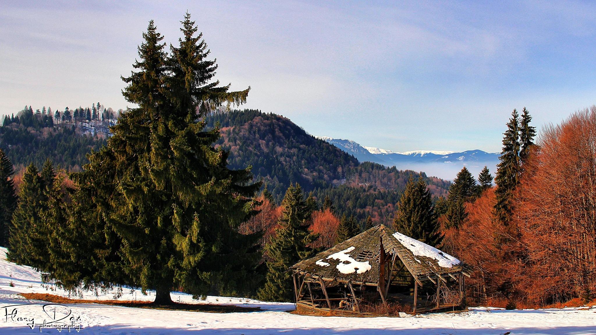 Photo in Landscape #trees #winter #clouds #mountain #blue #landscape