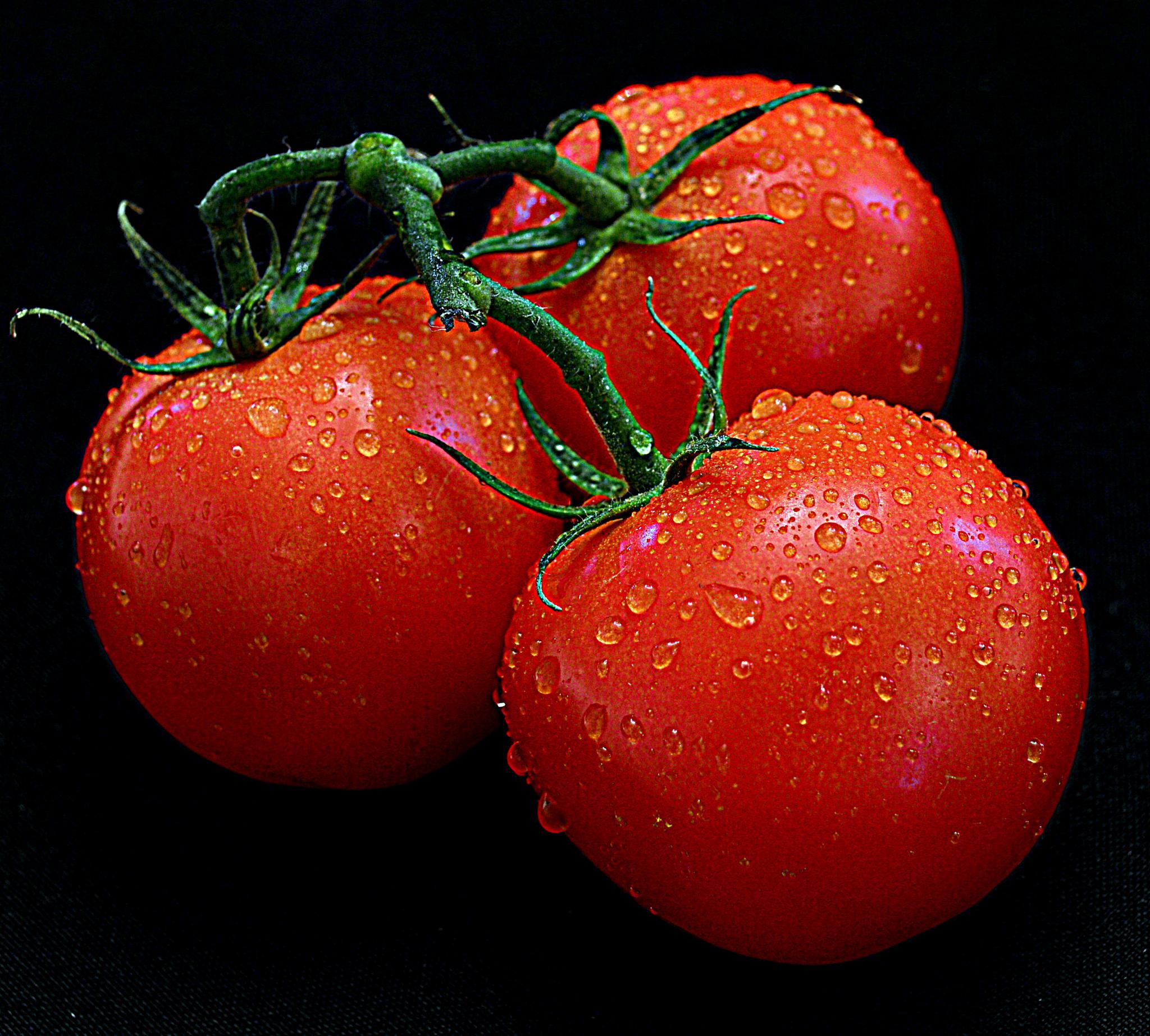 Tri tomatos by Andrew Piekut