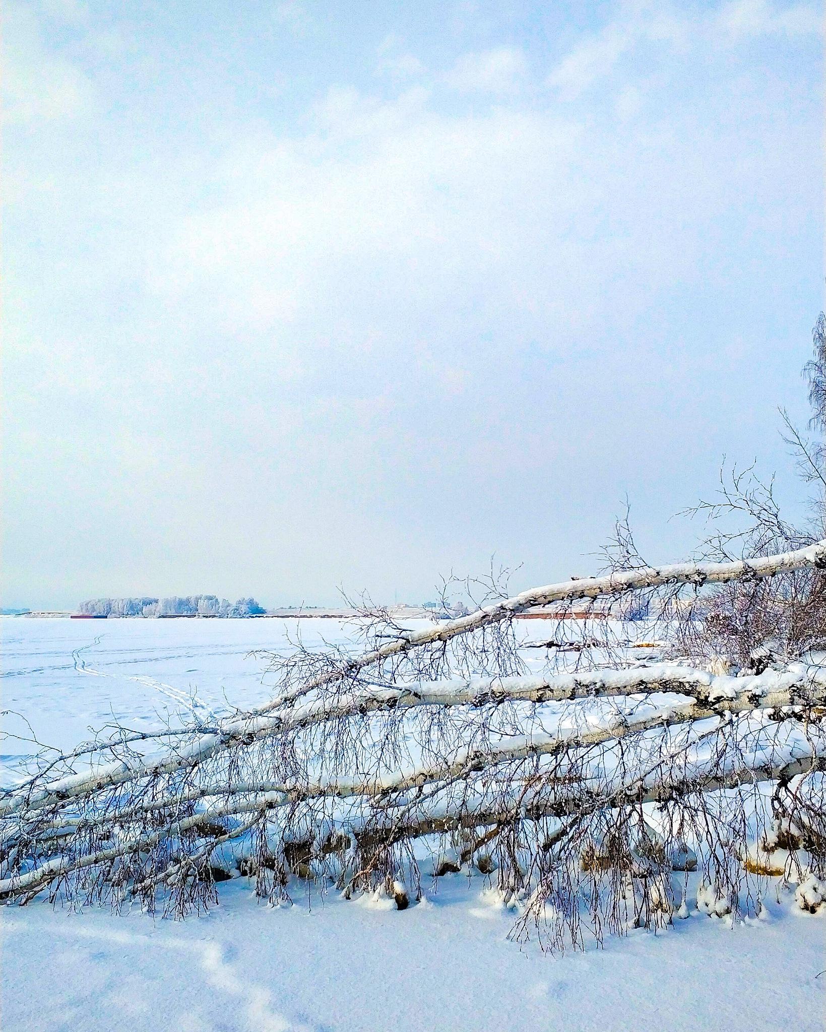 Photo in Landscape #birch #sky #winter #snow