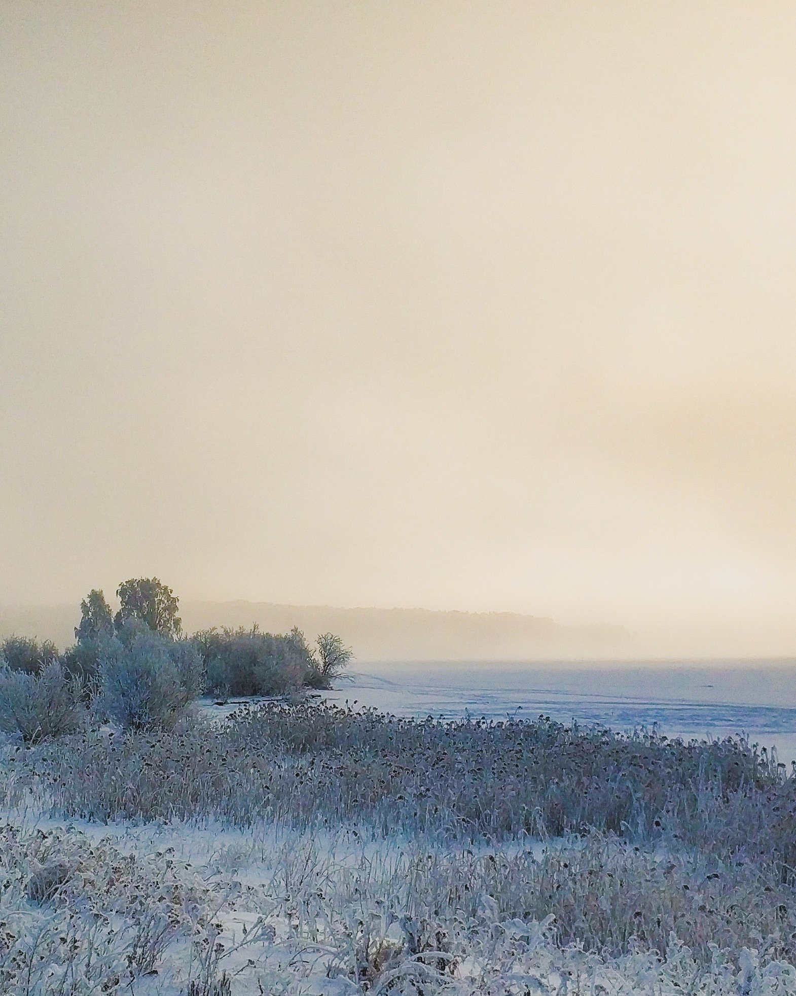Photo in Random #fog #mist #winter