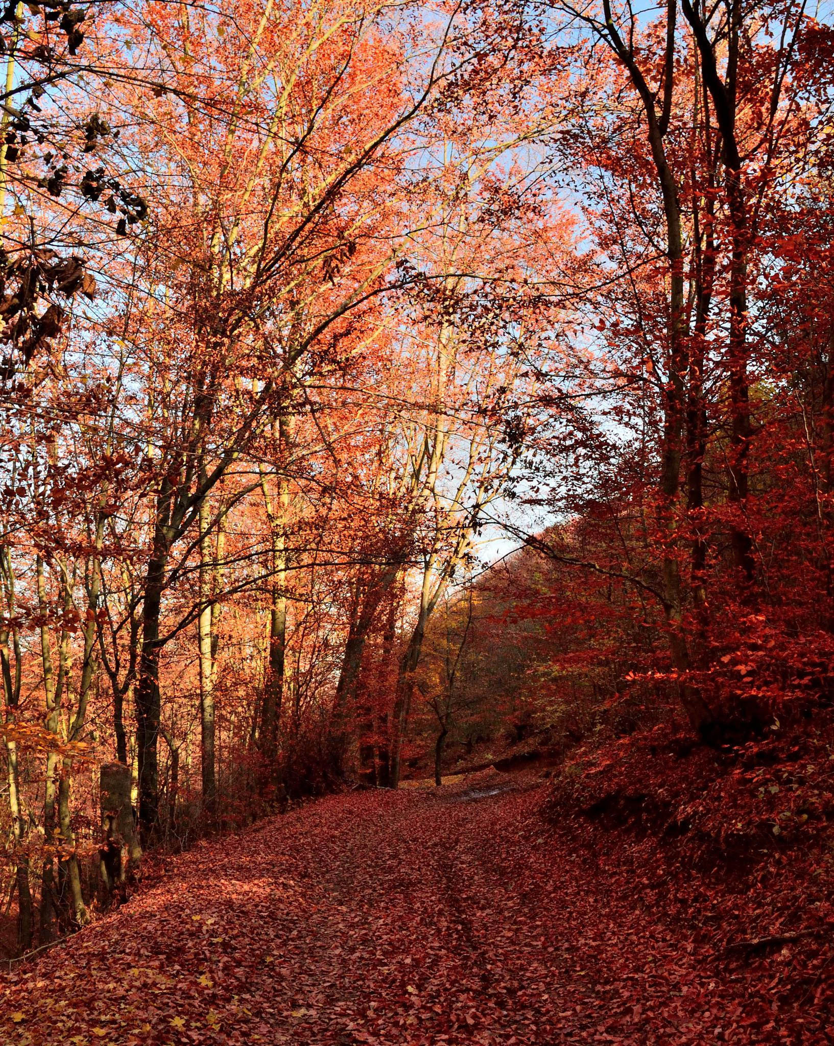 red forest by ioana