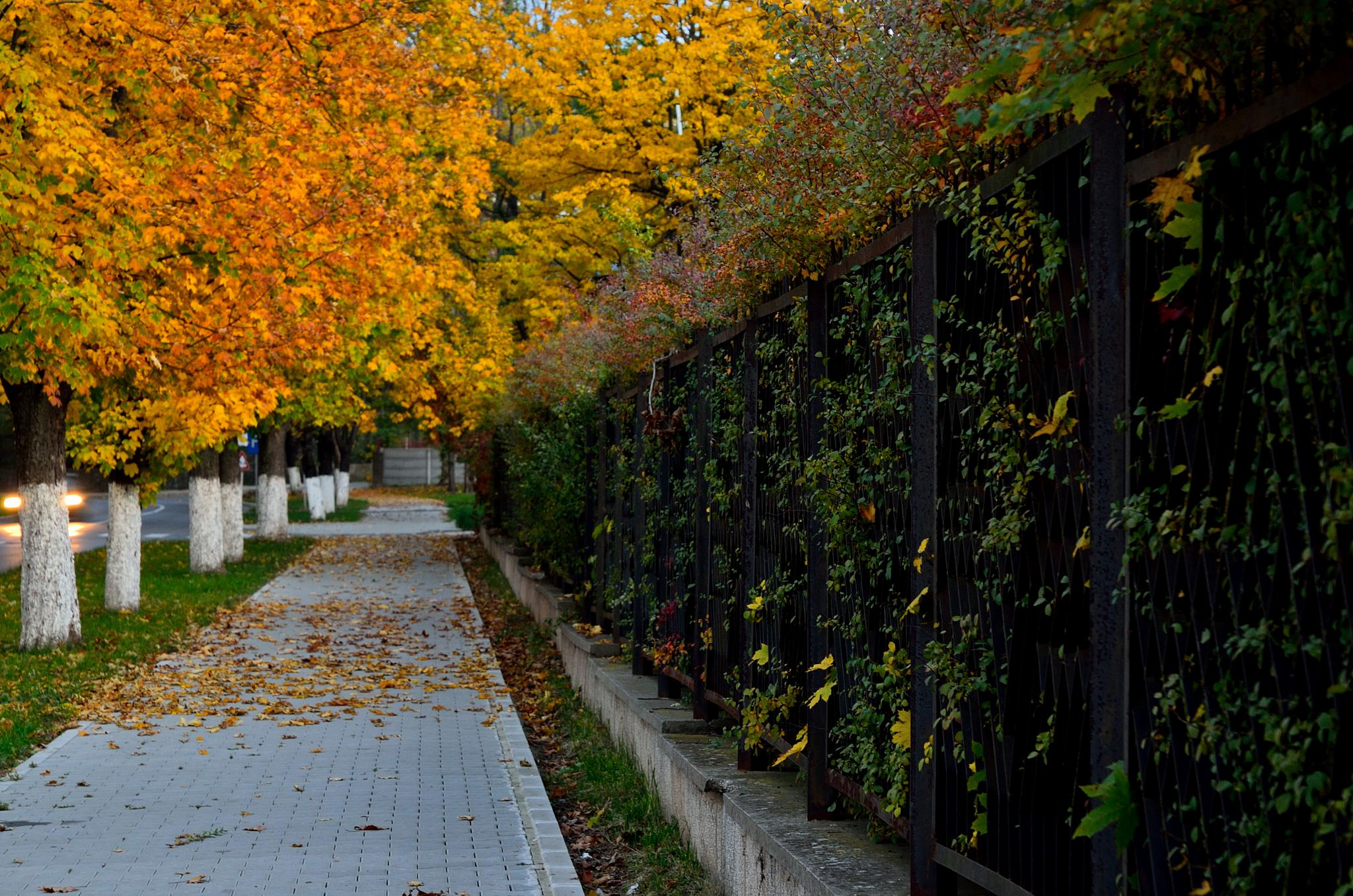 the streets of autumn by ioana