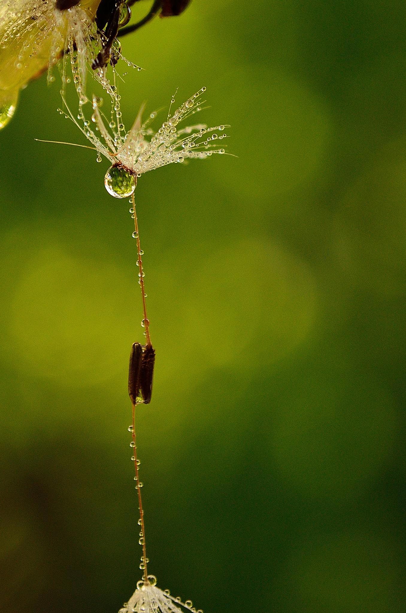 water drops #2 by ioana