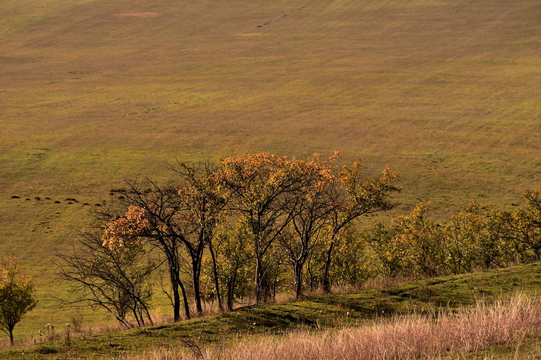 pastel autumn by ioana