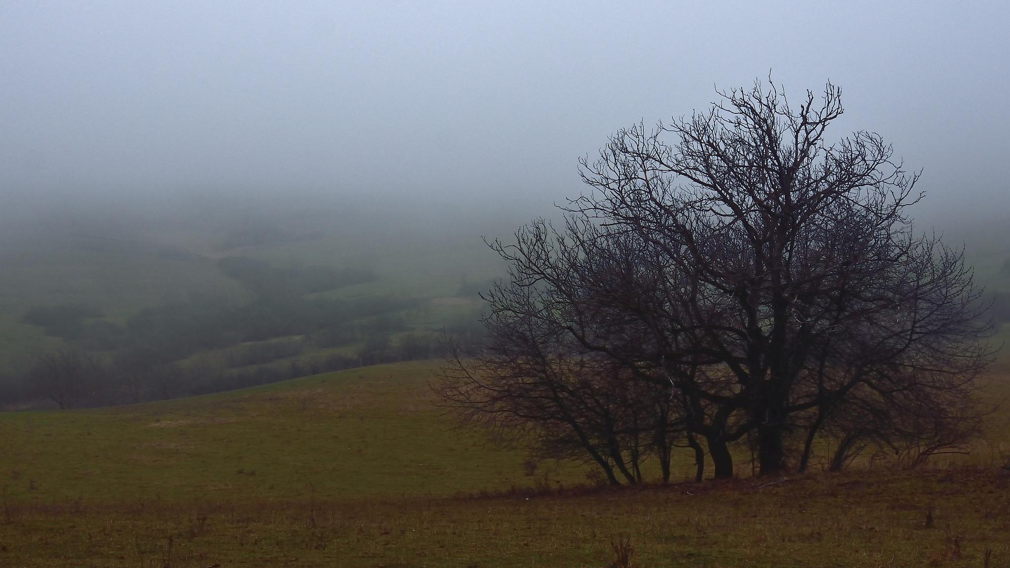 hazy day by ioana