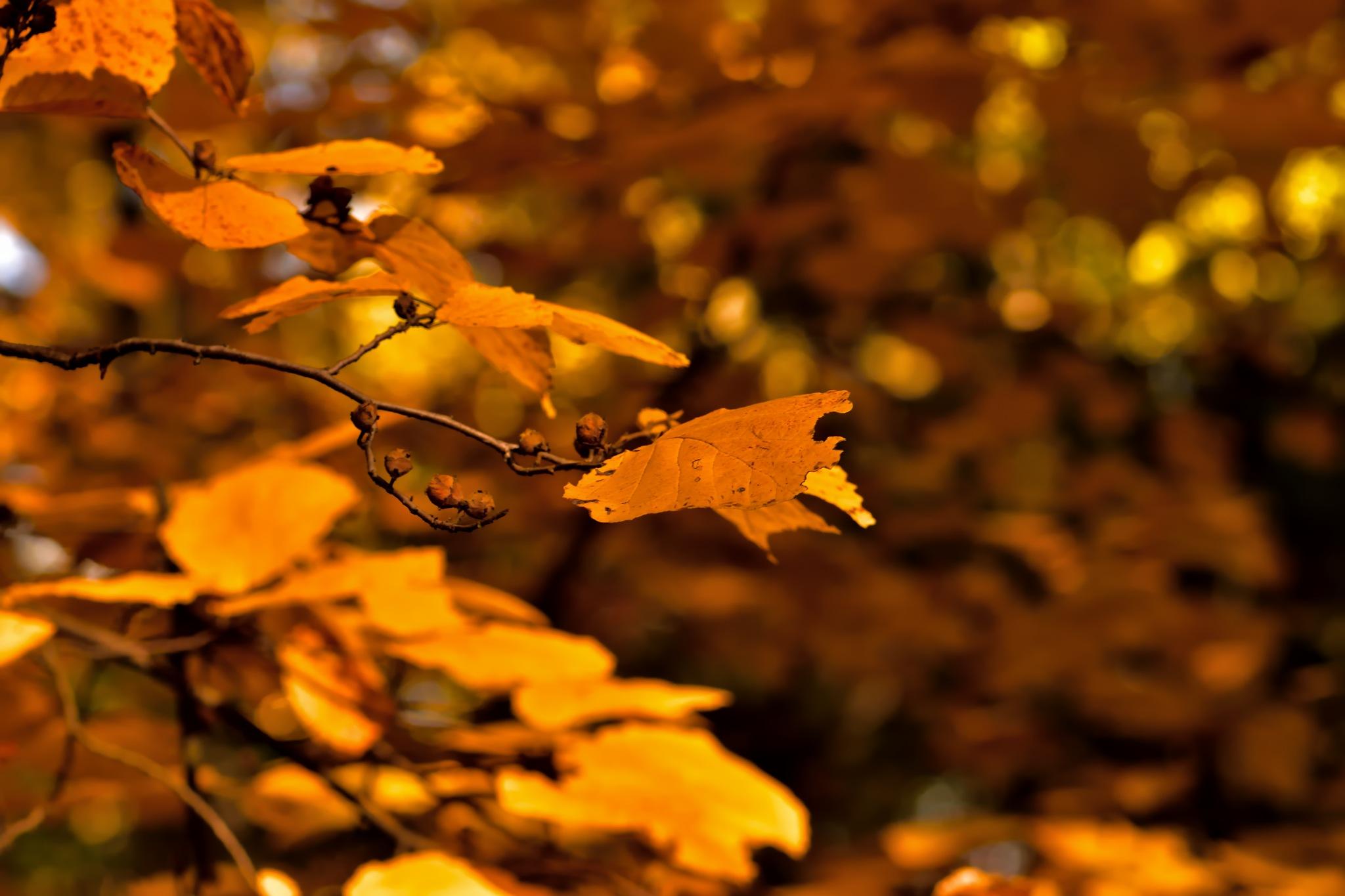 autumn leafs by ioana