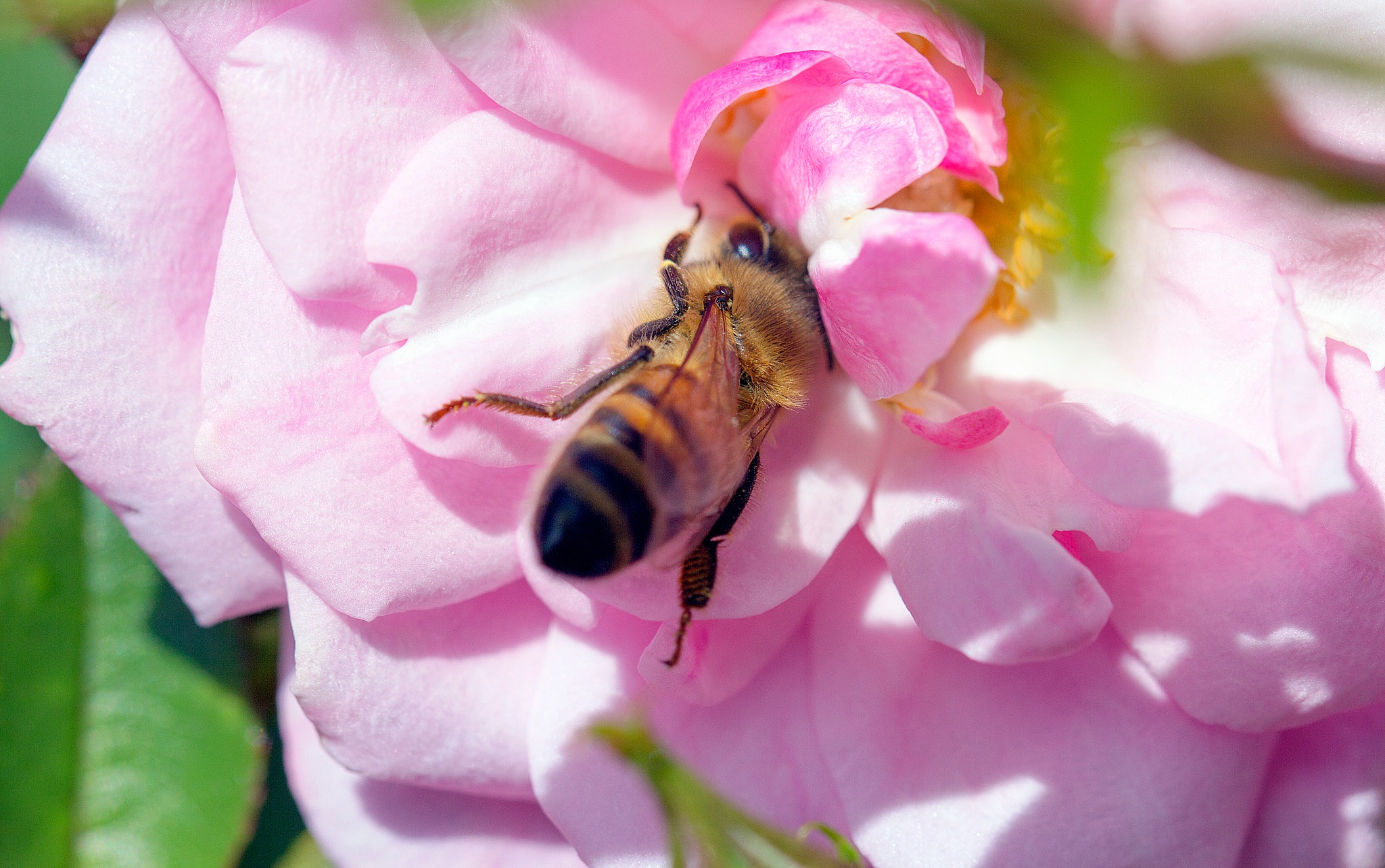Bee by Seven Treasures Photography
