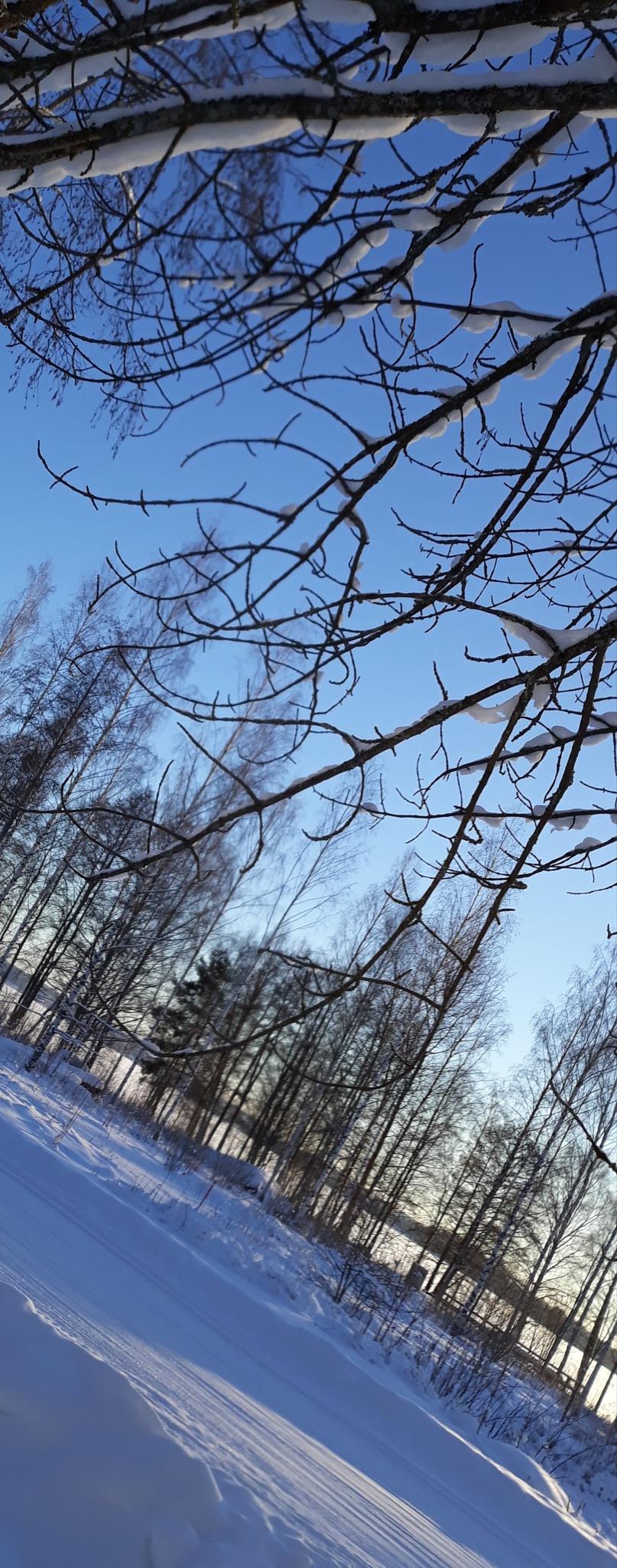 Blue sky, sun, snow and a tree by Sanna Rosman
