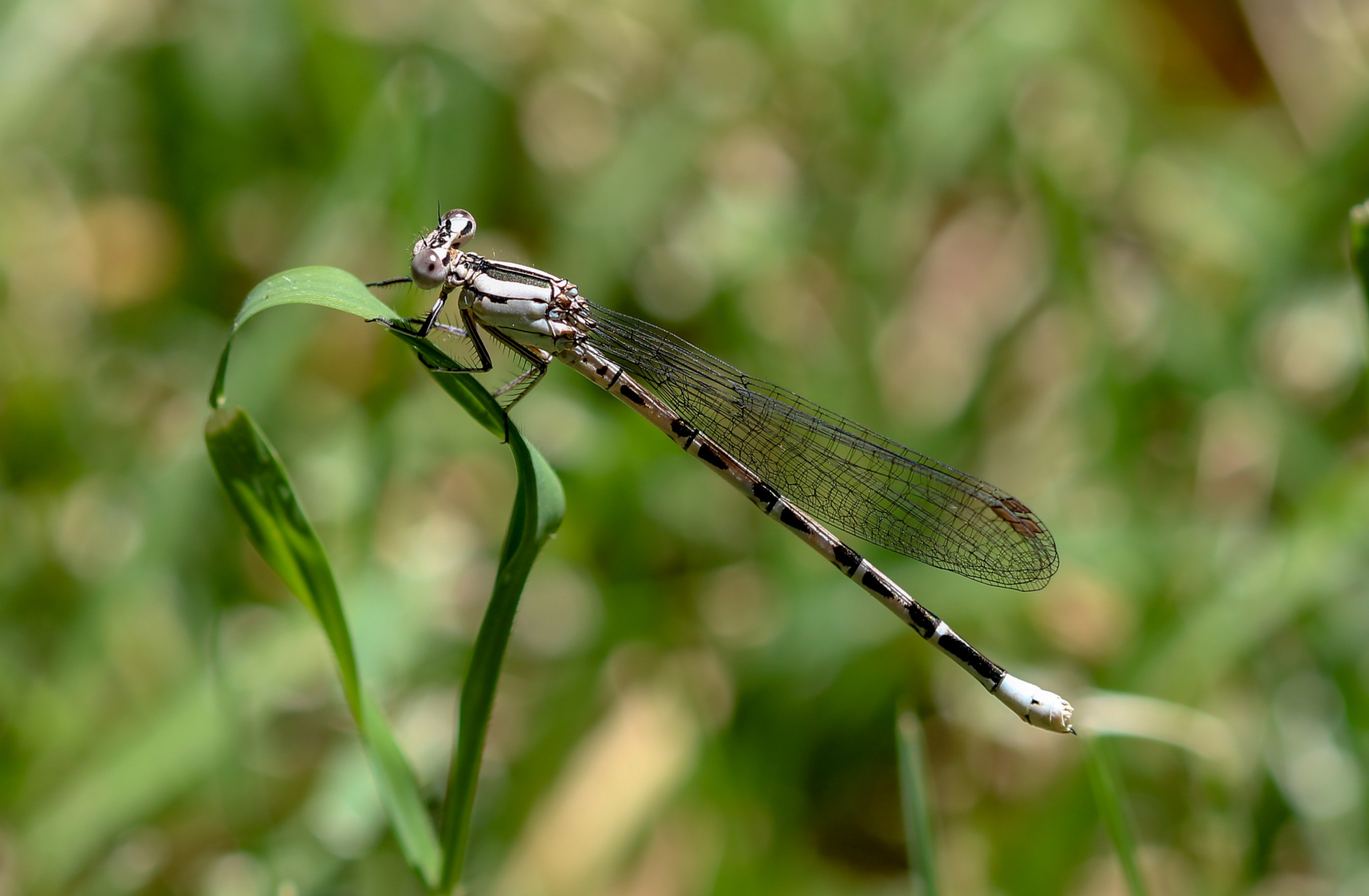 dragonfly by Toby Oggenfuss